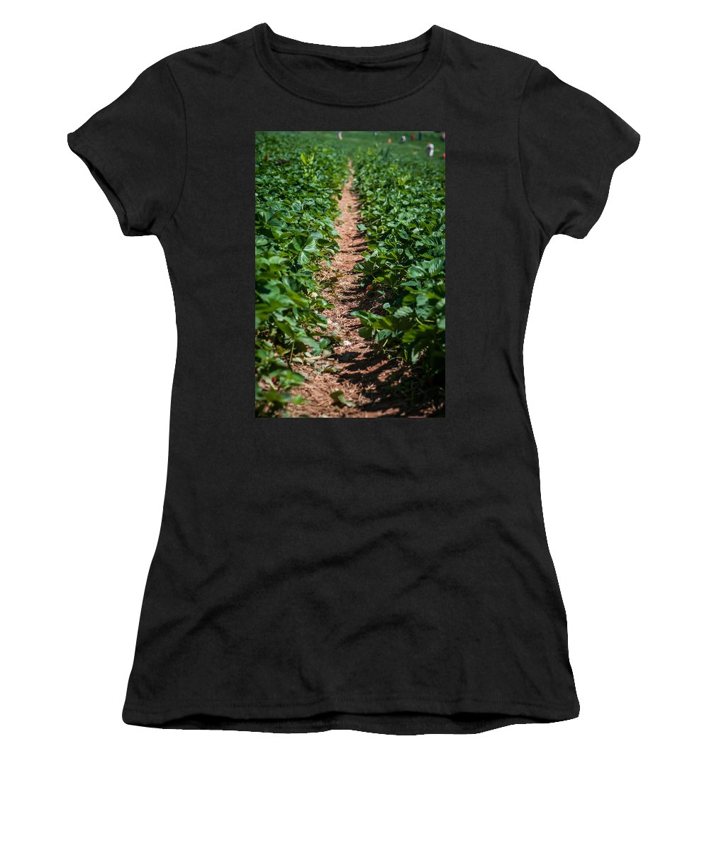 Agricultural Women's T-Shirt (Athletic Fit) featuring the photograph Strawberry Farm Field by Alex Grichenko
