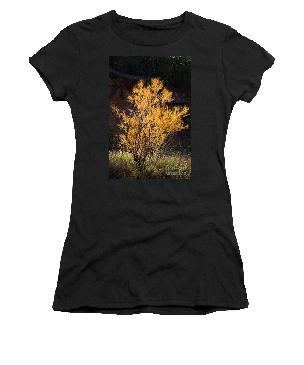 Texas Women's T-Shirt featuring the photograph Sunlit Tree In Palo Duro Canyon 110213.06 by Ashley M Conger