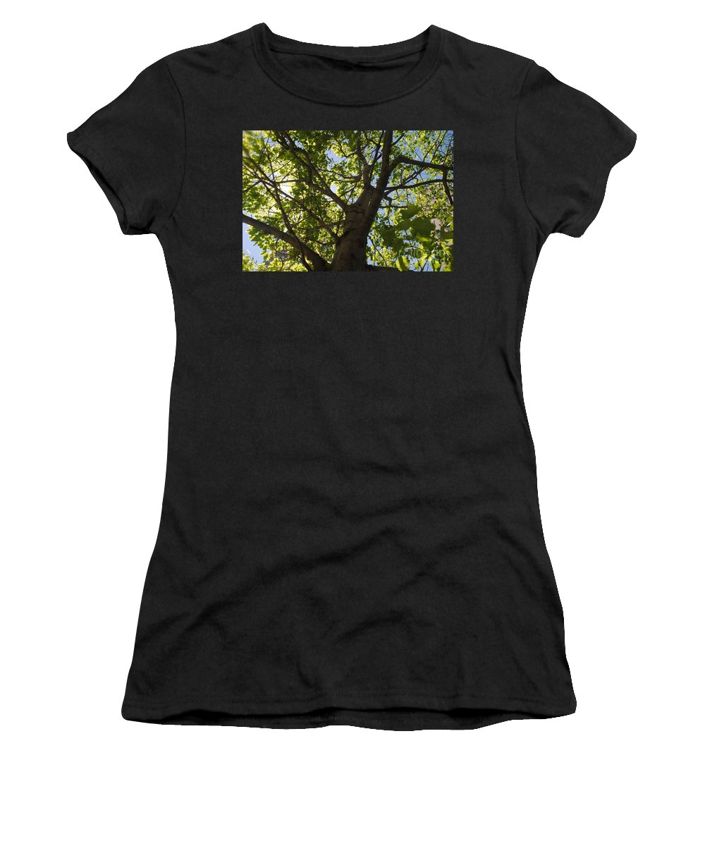 Women's T-Shirt featuring the digital art Trees 001 by Taylor Webb