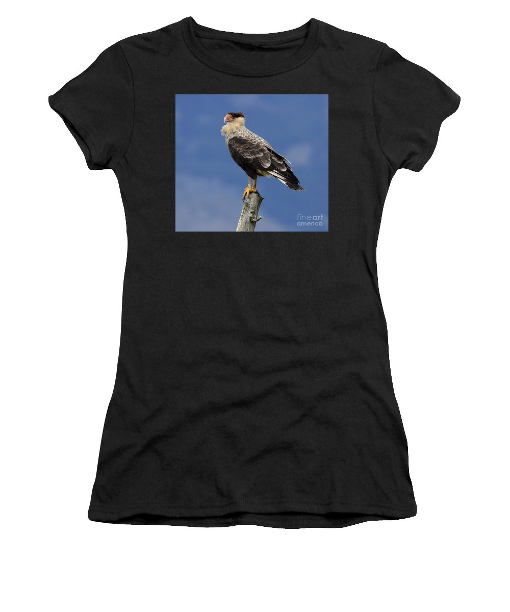 Caracara Women's T-Shirt (Athletic Fit) featuring the photograph Watchful Eyes Crested Southern Caracara by Bob Christopher
