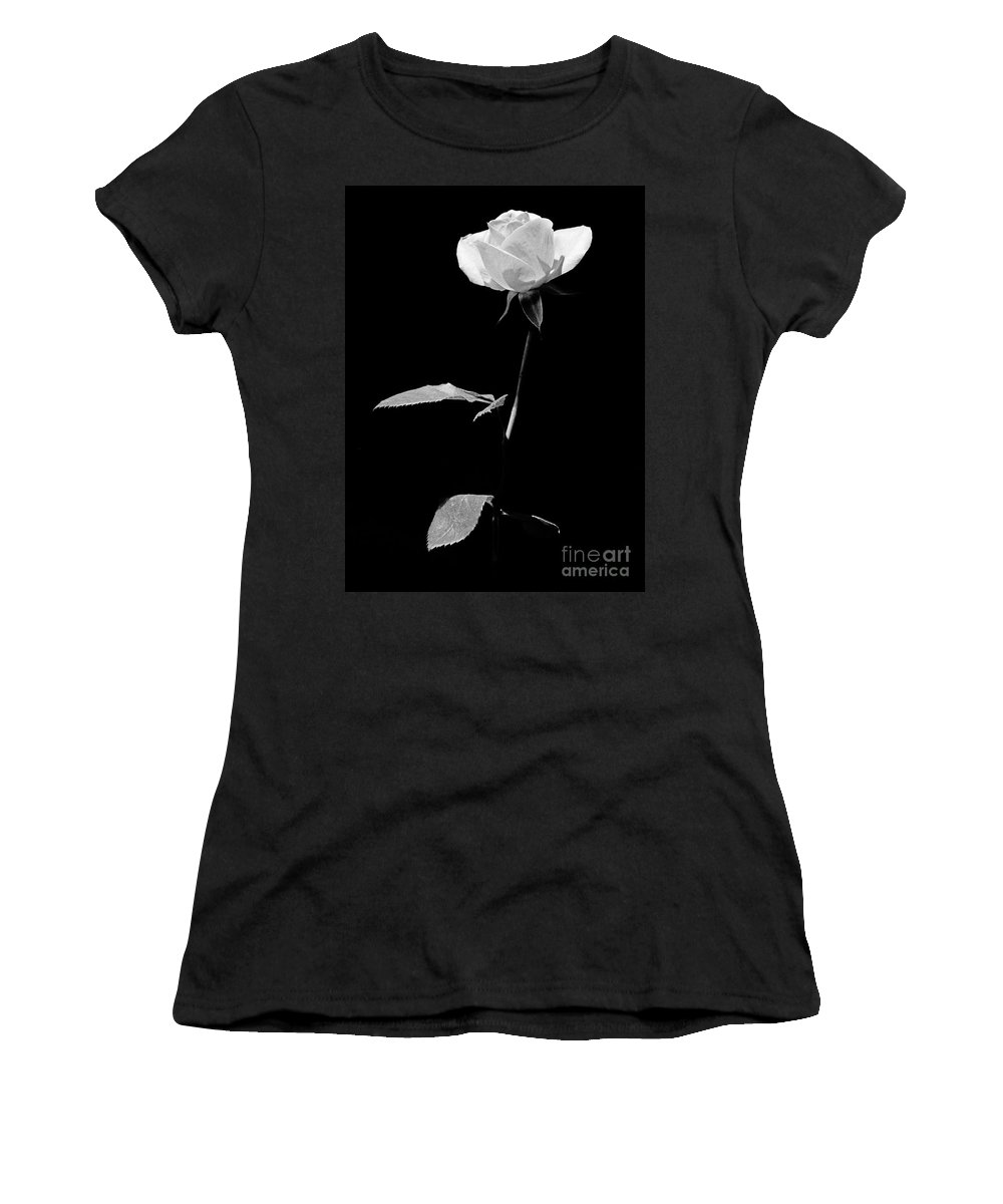 Rose Women's T-Shirt (Athletic Fit) featuring the photograph White Rose by Casper Cammeraat