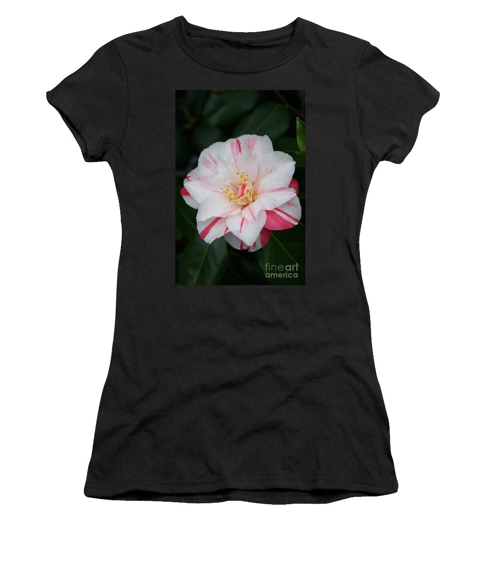 White Camellia Women's T-Shirt featuring the photograph White With Pink Camellia by Christiane Schulze Art And Photography