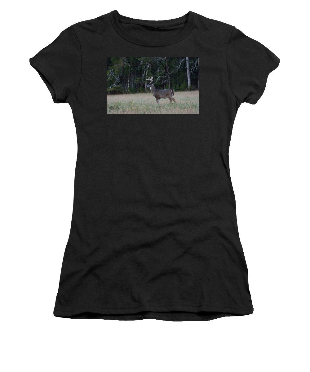 Cades Cove Women's T-Shirt featuring the photograph Whitetail Buck 1 by Todd Hostetter