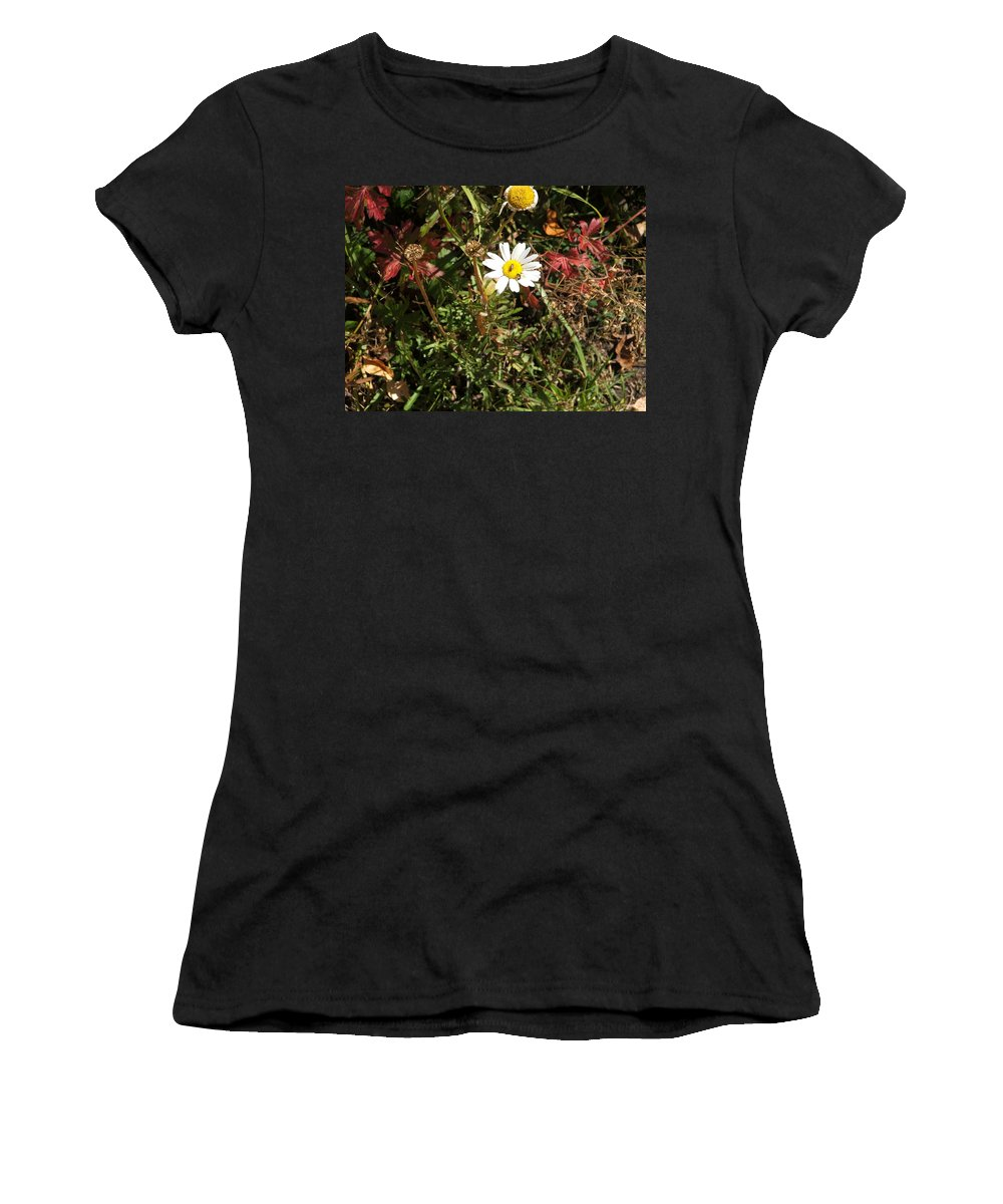 Insect Women's T-Shirt featuring the photograph Wildflower @ Kit Carson by Ron Monsour