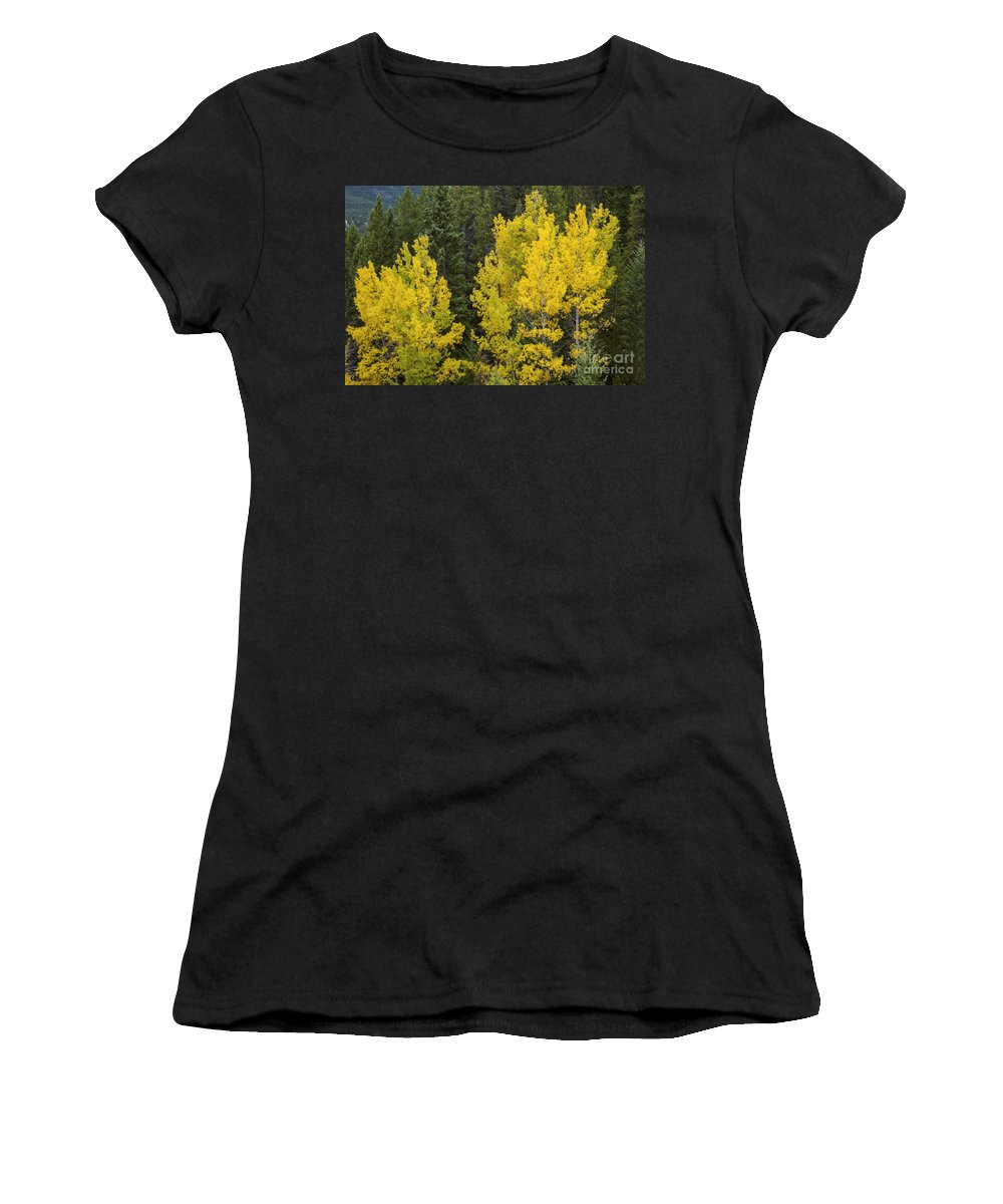 Banff National Park Canada Parks Birch Tree Trees Fall Color Autumn Leaves Colors Leaf Leaves Nature Landscape Landscapes Women's T-Shirt (Athletic Fit) featuring the photograph Yellow On Green by Bob Phillips