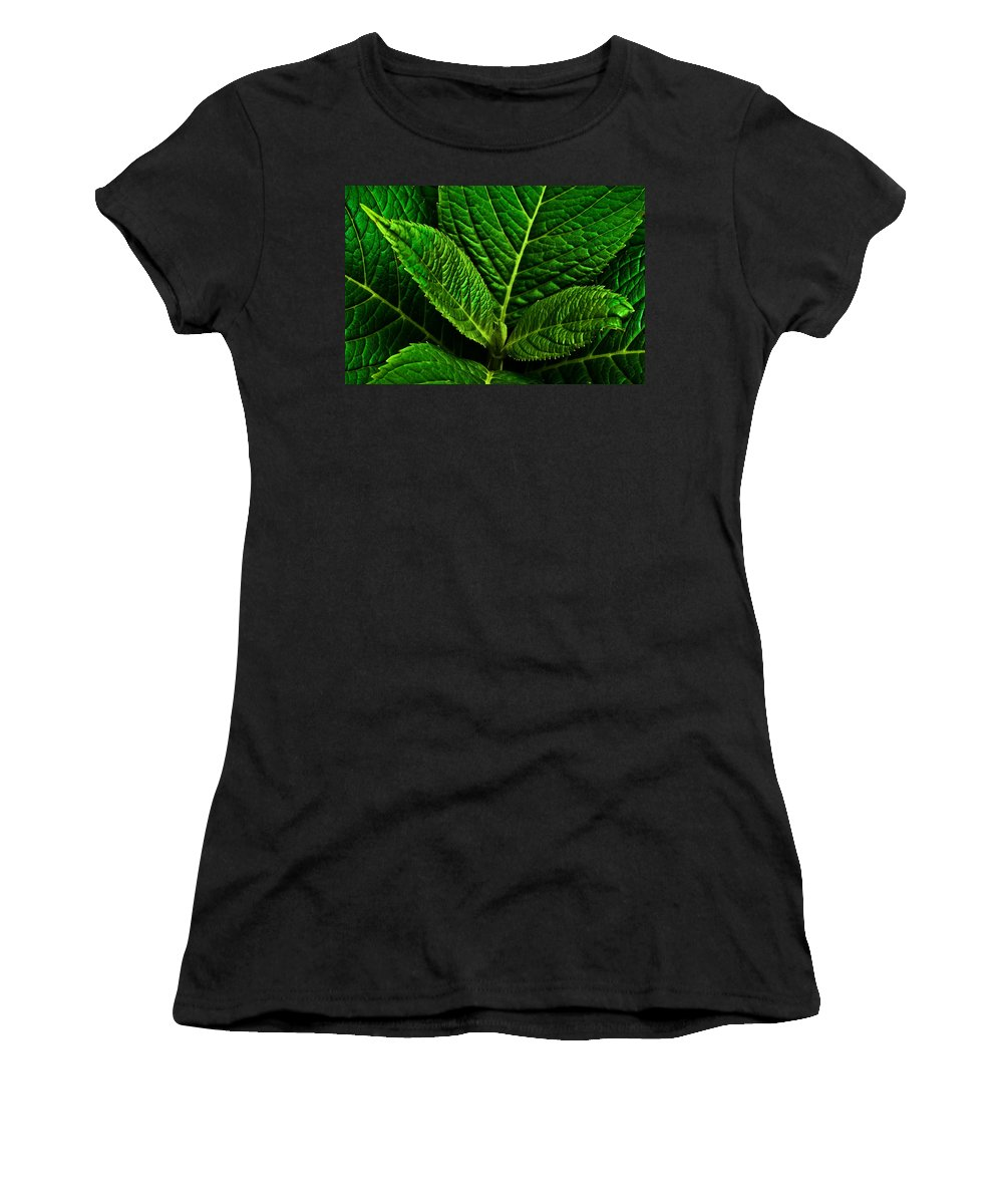 Hydrangea Women's T-Shirt (Athletic Fit) featuring the photograph Emerging Hydrangea Leaf by Onyonet Photo Studios