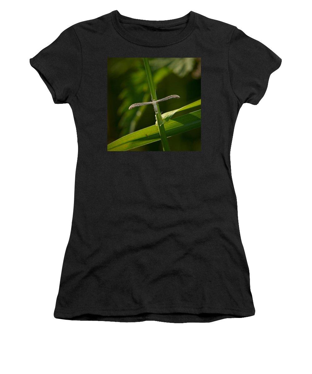 Jouko Lehto Women's T-Shirt featuring the photograph Plume Moth by Jouko Lehto