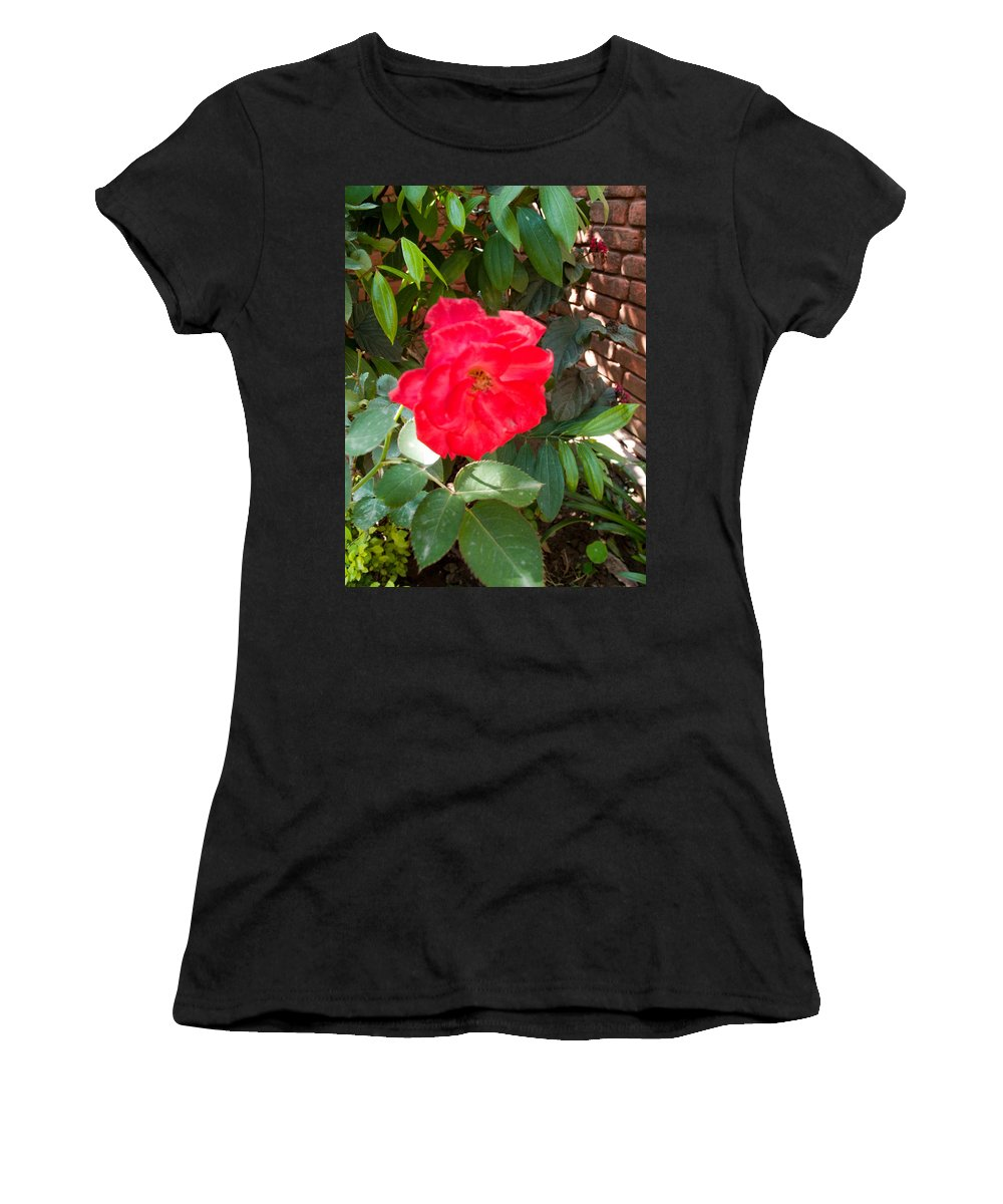 Pink Women's T-Shirt (Athletic Fit) featuring the photograph A Pink Rose Being Backlight With The Petals Looking Translucent by Ashish Agarwal
