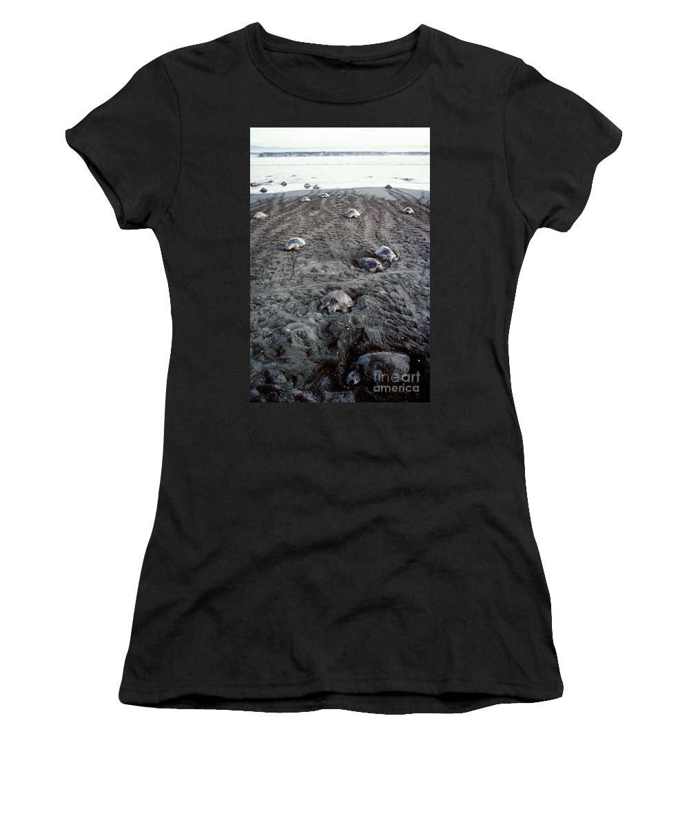 Olive Ridley Turtles Women's T-Shirt featuring the photograph Arribada Of Olive Ridley Turtles, Costa by Gregory G Dimijian MD