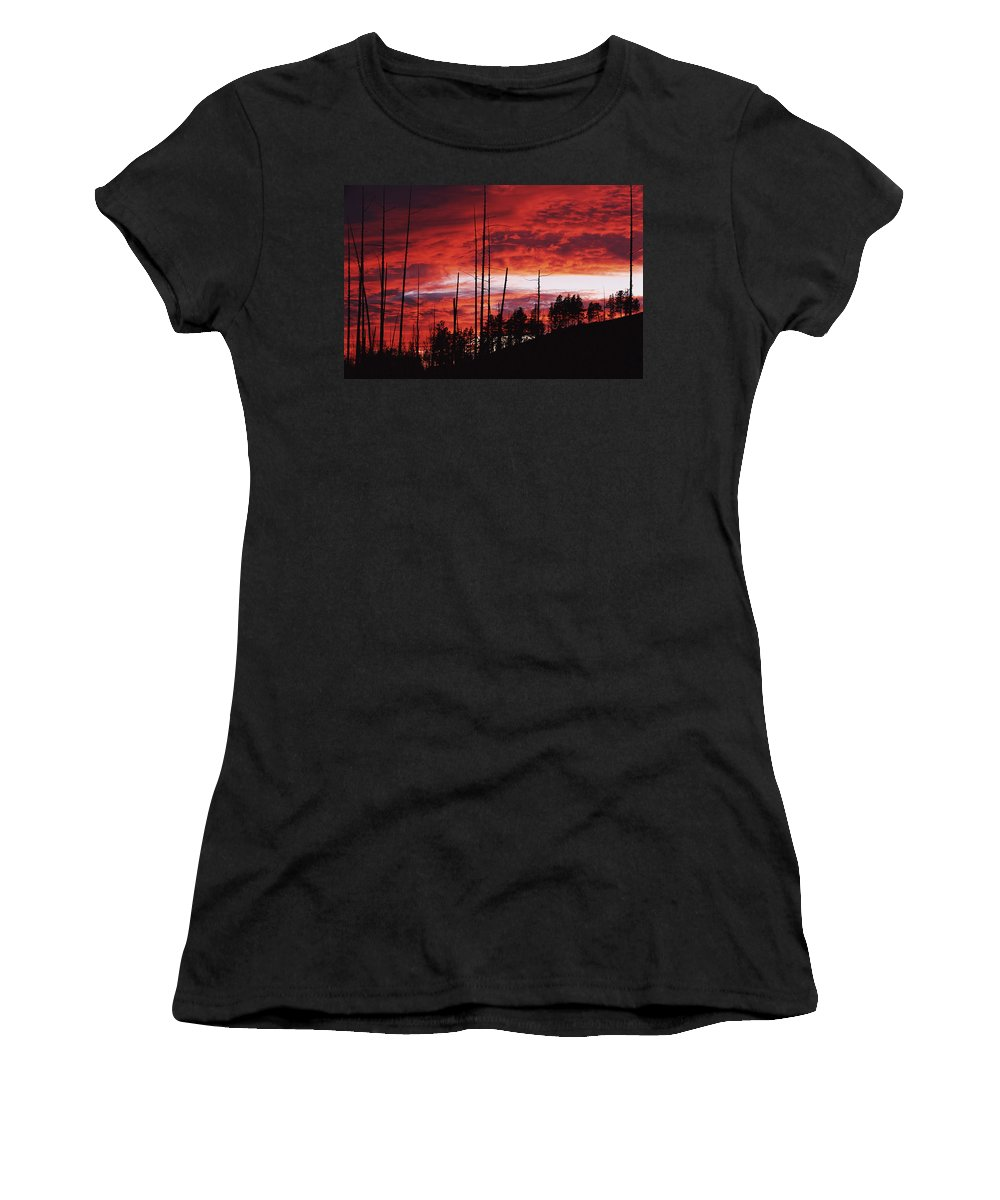 Trunks Women's T-Shirt (Athletic Fit) featuring the photograph Burnt Trees Against A Sunset by Axiom Photographic