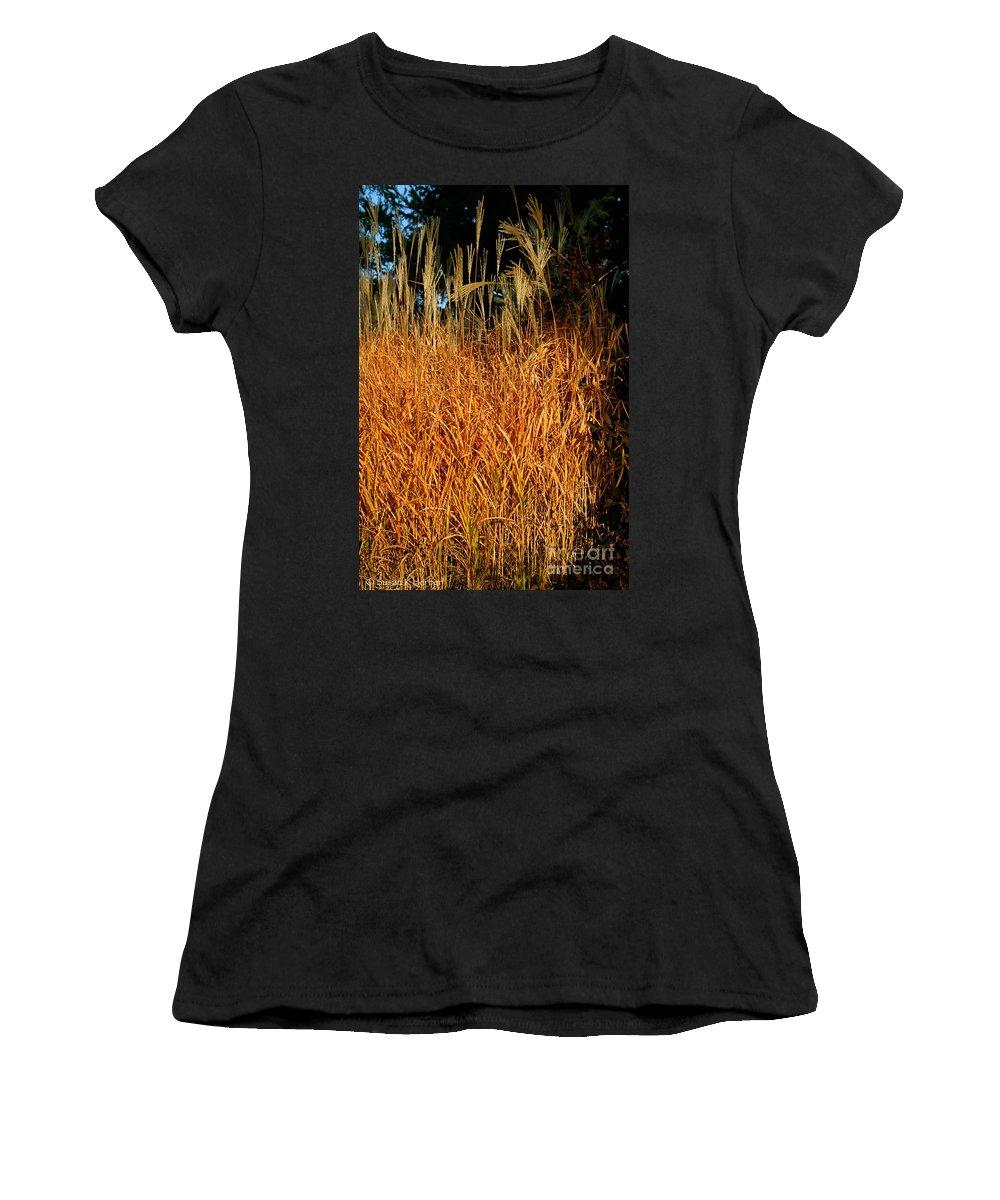 Outdoors Women's T-Shirt featuring the photograph Golden Silver Grass by Susan Herber