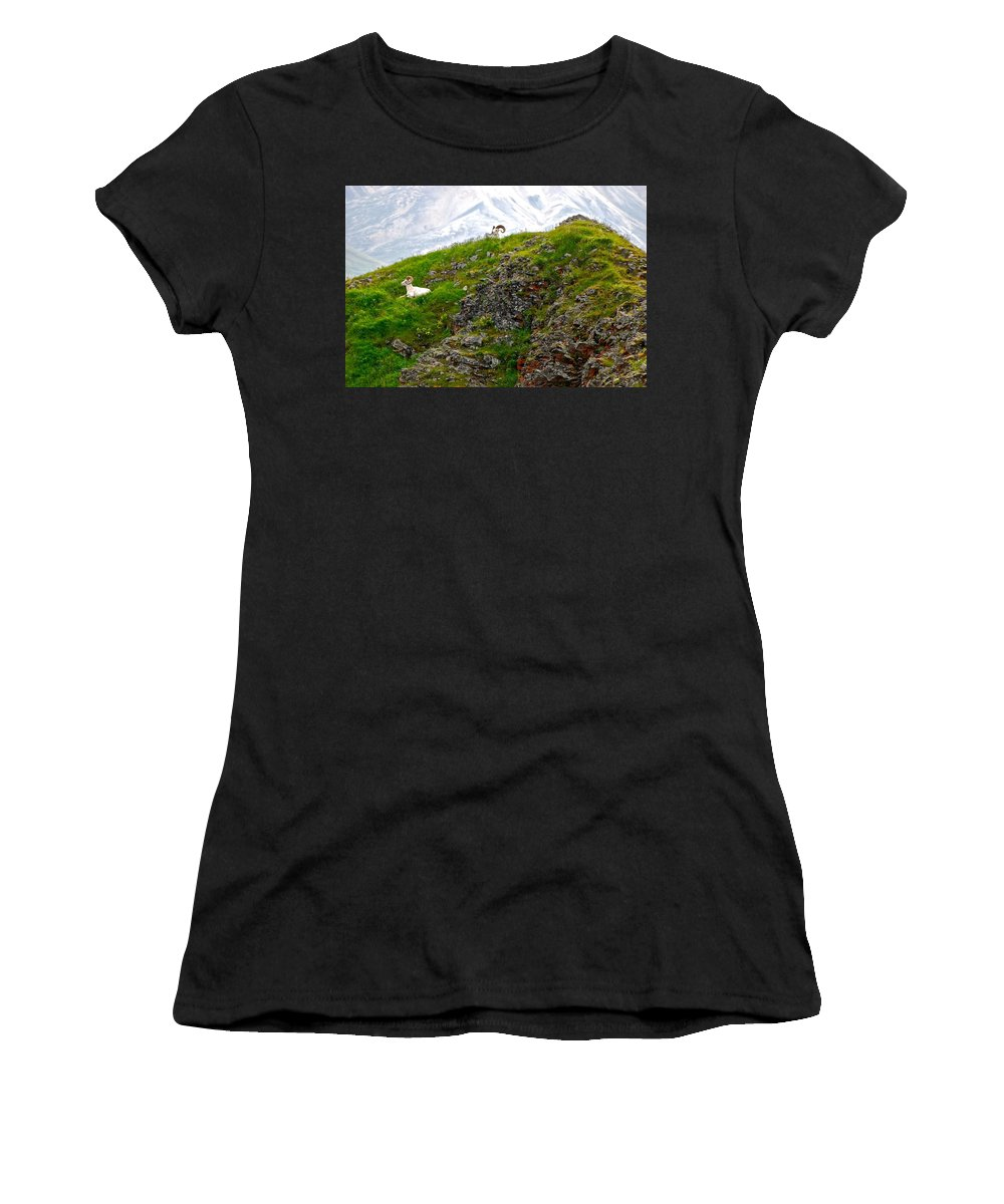 Dall Sheep Women's T-Shirt (Athletic Fit) featuring the photograph Perched by Eric Tressler