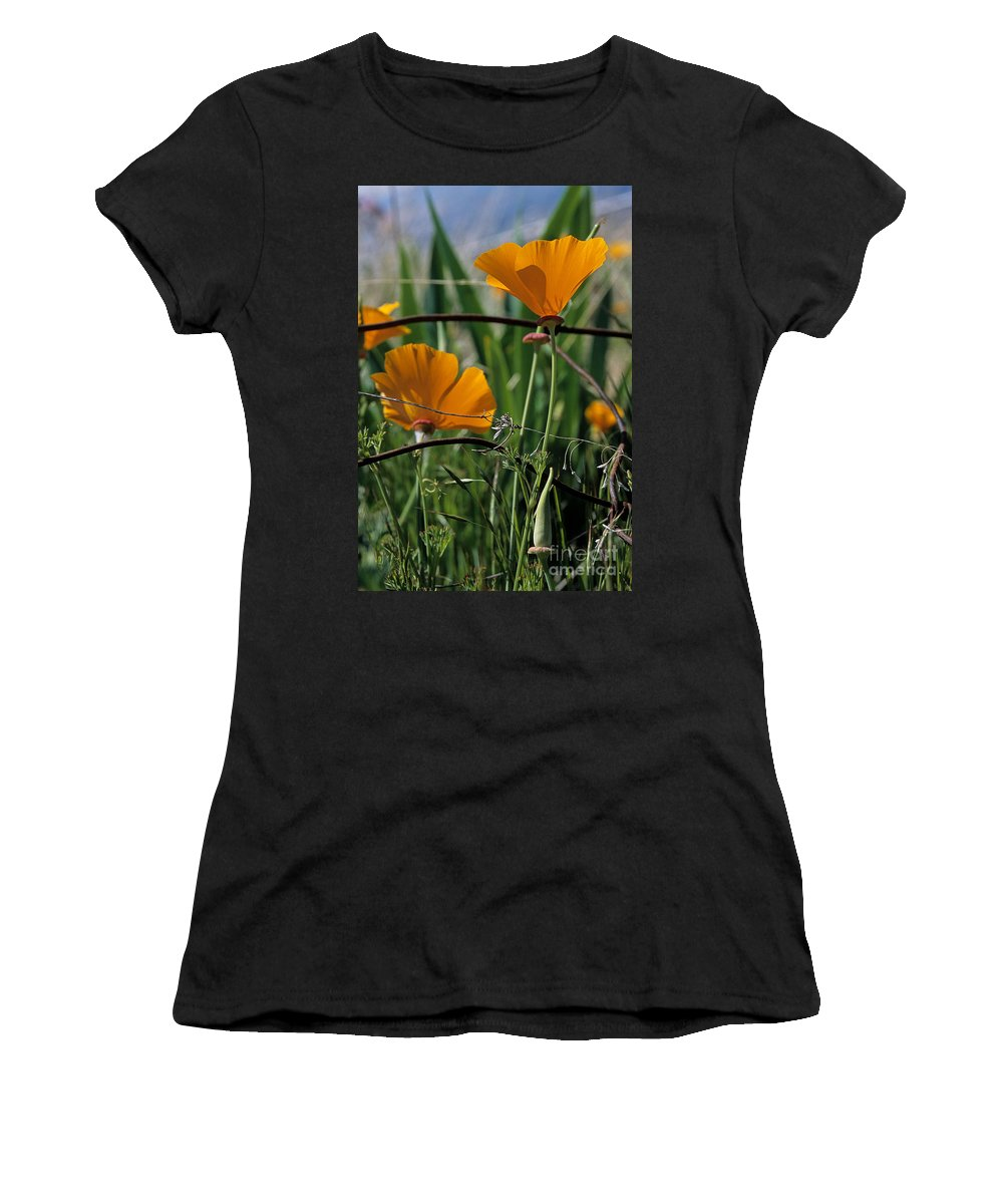 California Poppies Women's T-Shirt featuring the photograph Poppies by Sharon Elliott