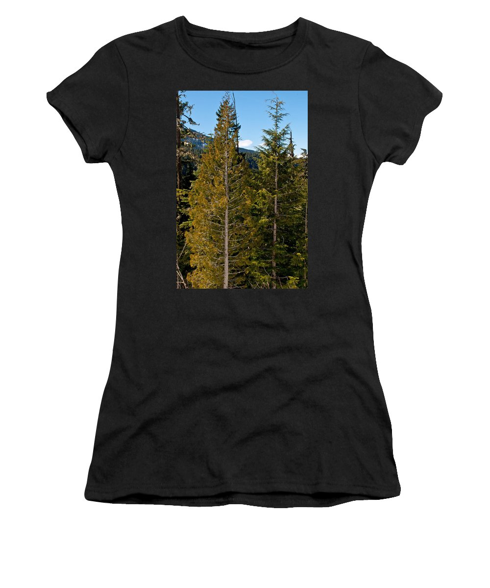 Evergreens Women's T-Shirt (Athletic Fit) featuring the photograph Sheared Trees by Tikvah's Hope