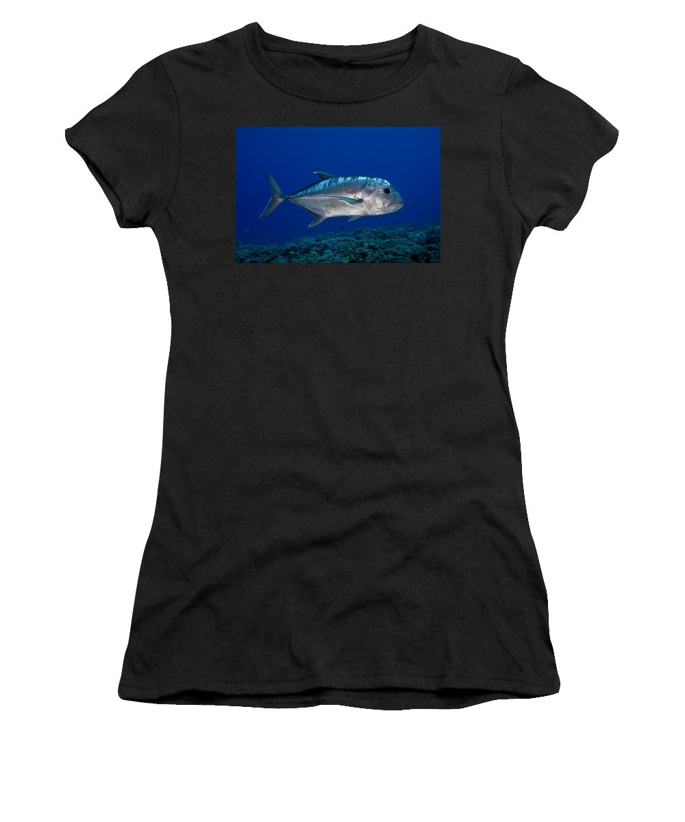 Animal Women's T-Shirt (Athletic Fit) featuring the photograph White Ulua by Dave Fleetham