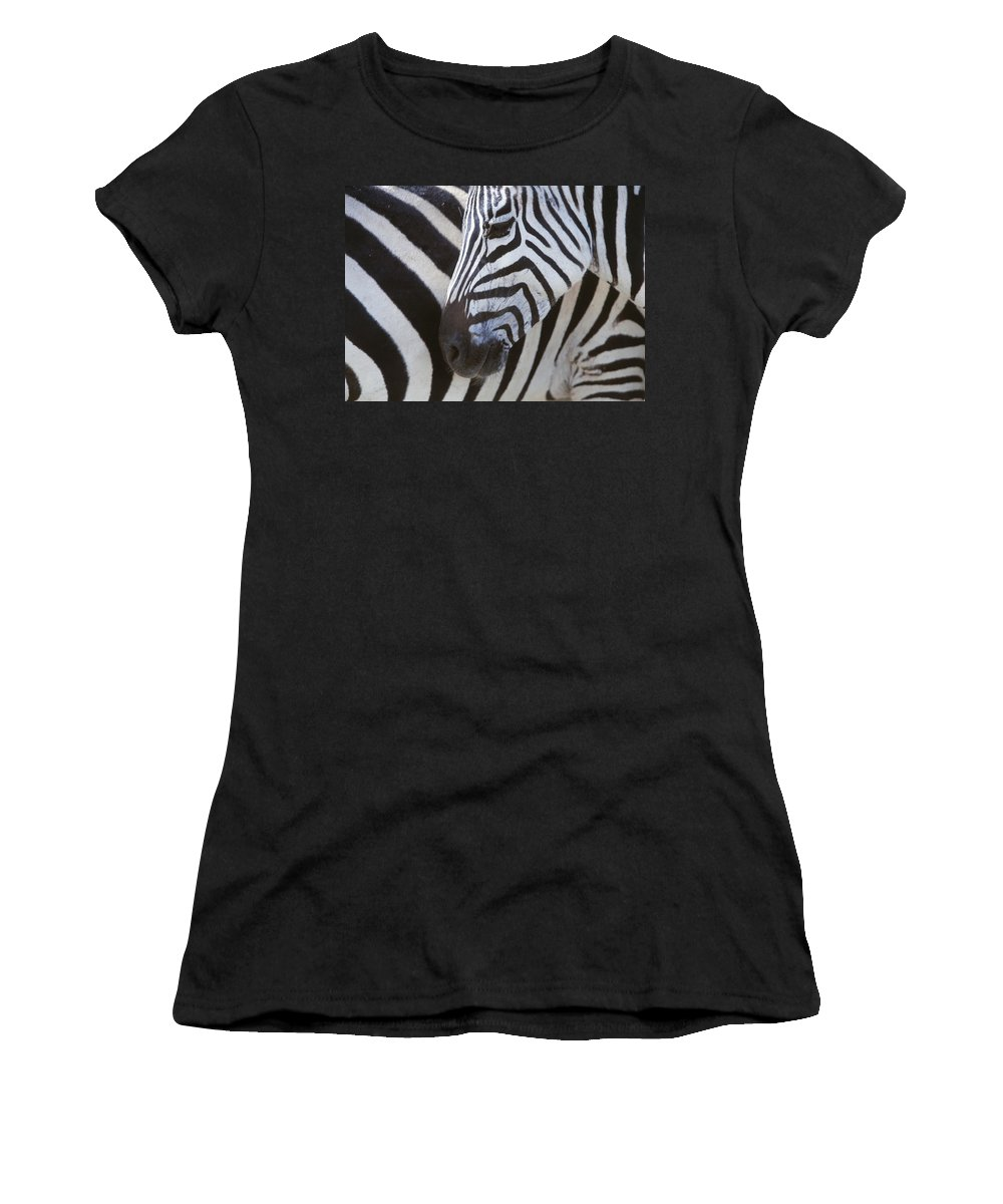 White Women's T-Shirt (Athletic Fit) featuring the photograph Zebras Close Up by Axiom Photographic