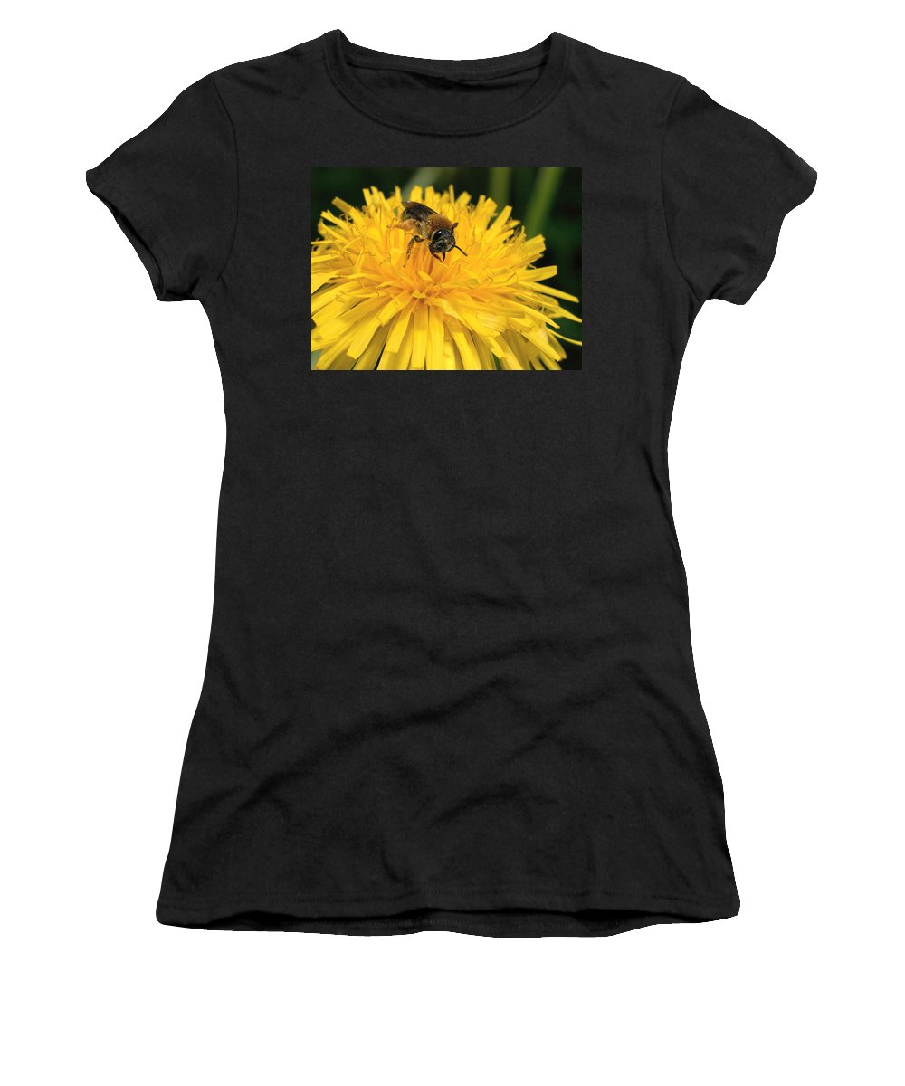 Lehtokukka Women's T-Shirt (Athletic Fit) featuring the photograph A Bee In A Dandelion by Jouko Lehto