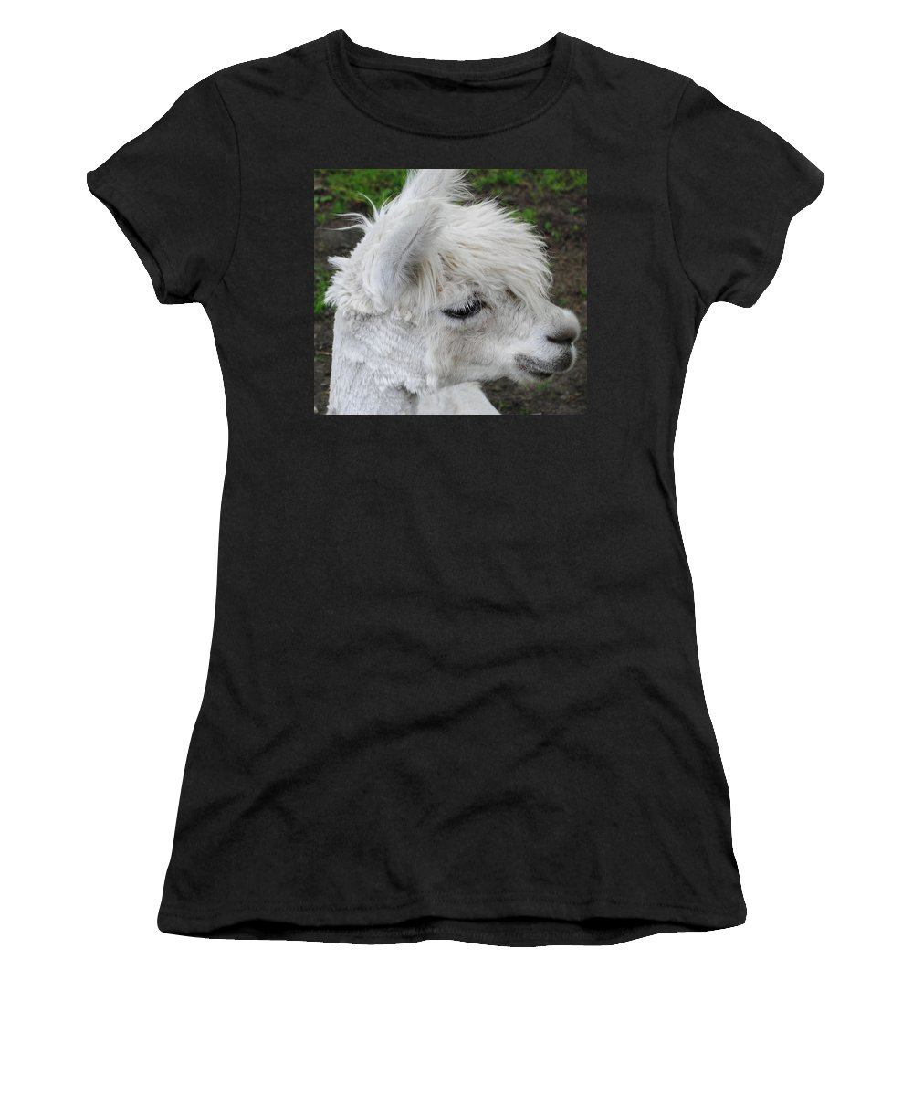 Baby Llama Women's T-Shirt featuring the photograph Baby Llama by Ellen Henneke