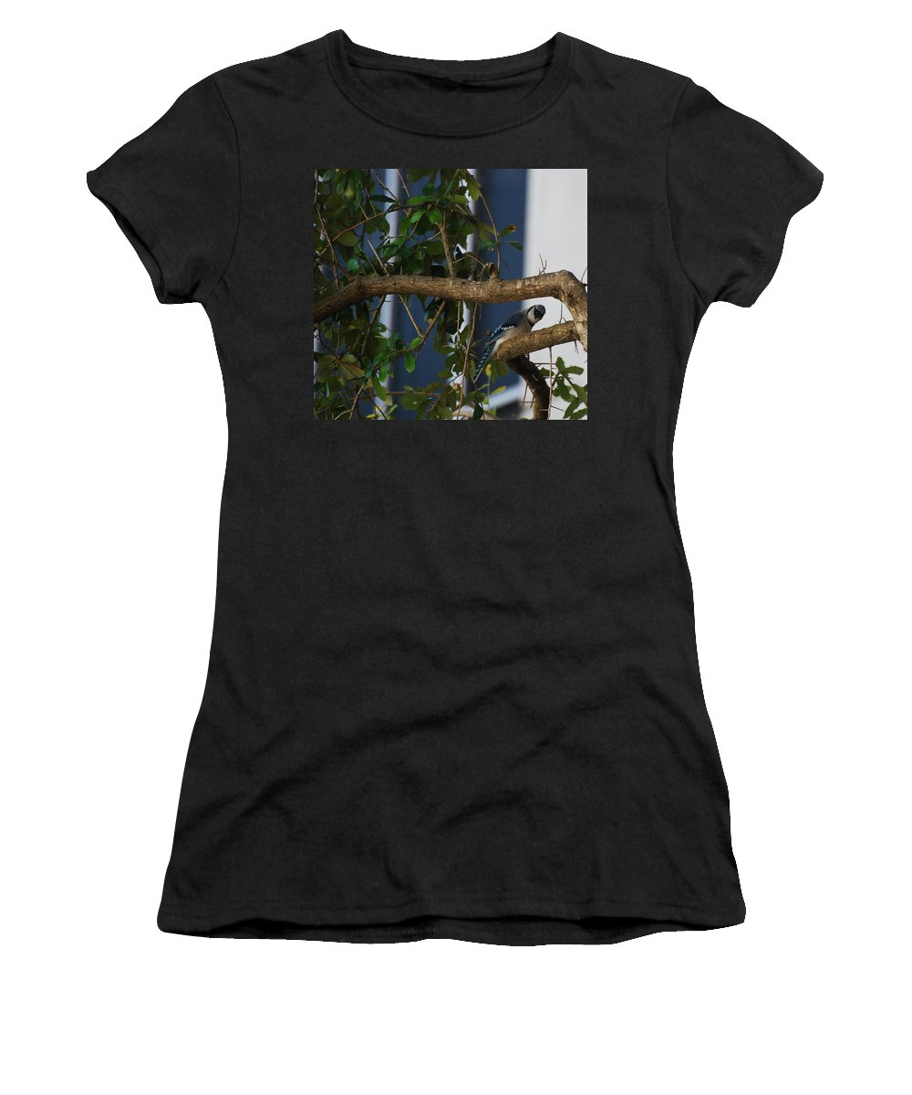 Birds Women's T-Shirt (Athletic Fit) featuring the photograph Blue Bird by Rob Hans