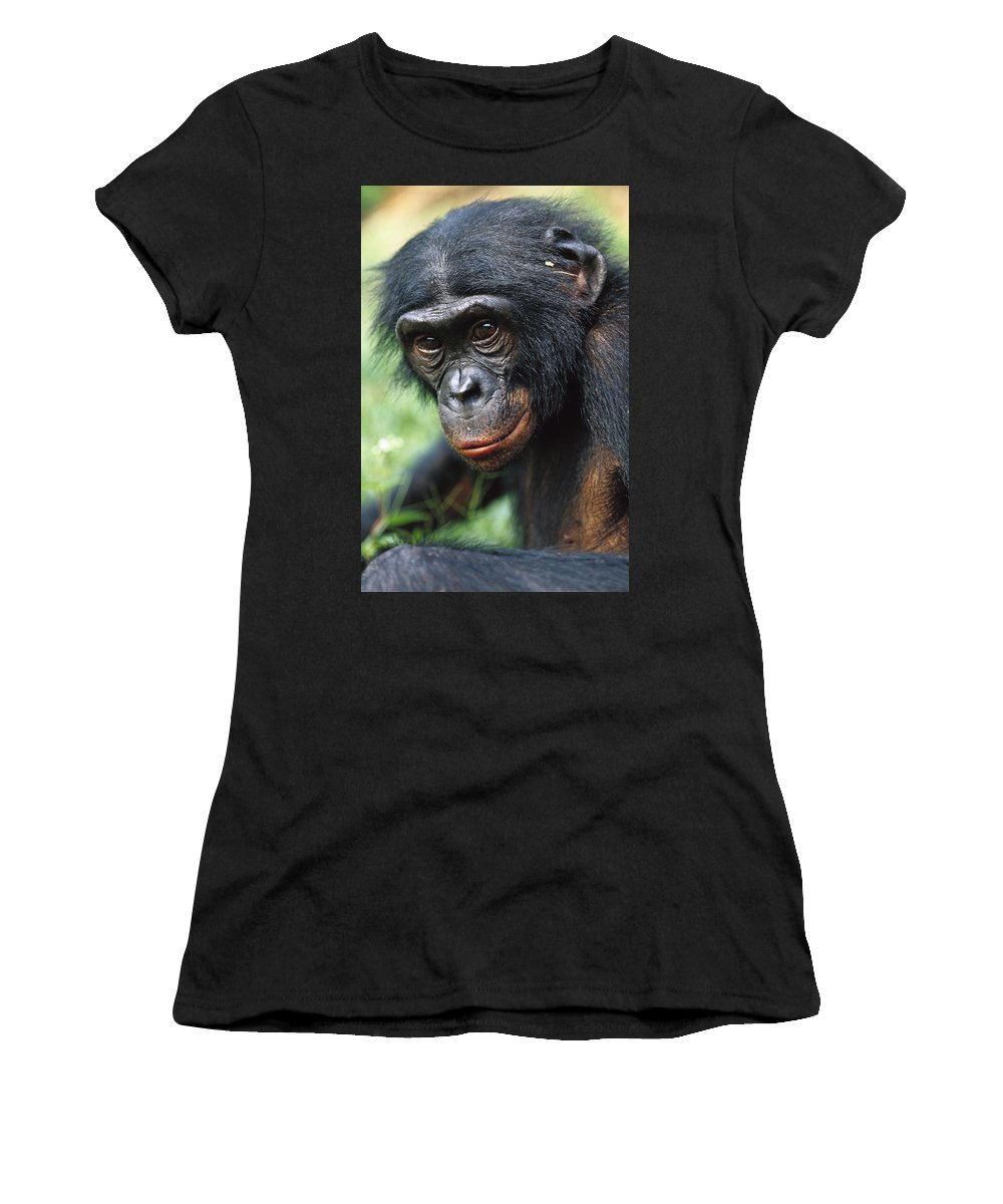 Mp Women's T-Shirt featuring the photograph Bonobo Pan Paniscus Portrait by Cyril Ruoso