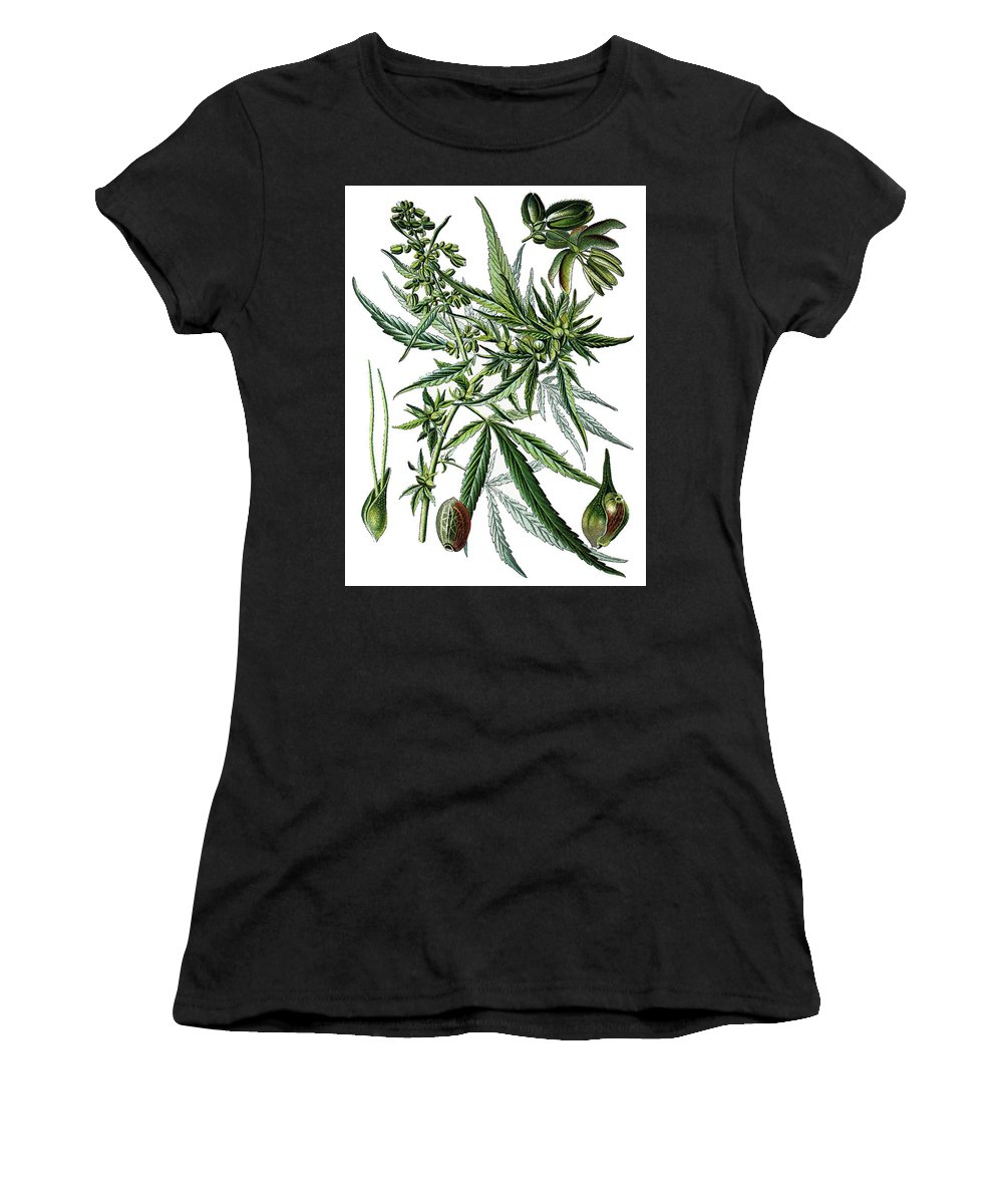 Cannabis Sativa Women's T-Shirt (Athletic Fit) featuring the drawing Cannabis Sativa by Bildagentur-online