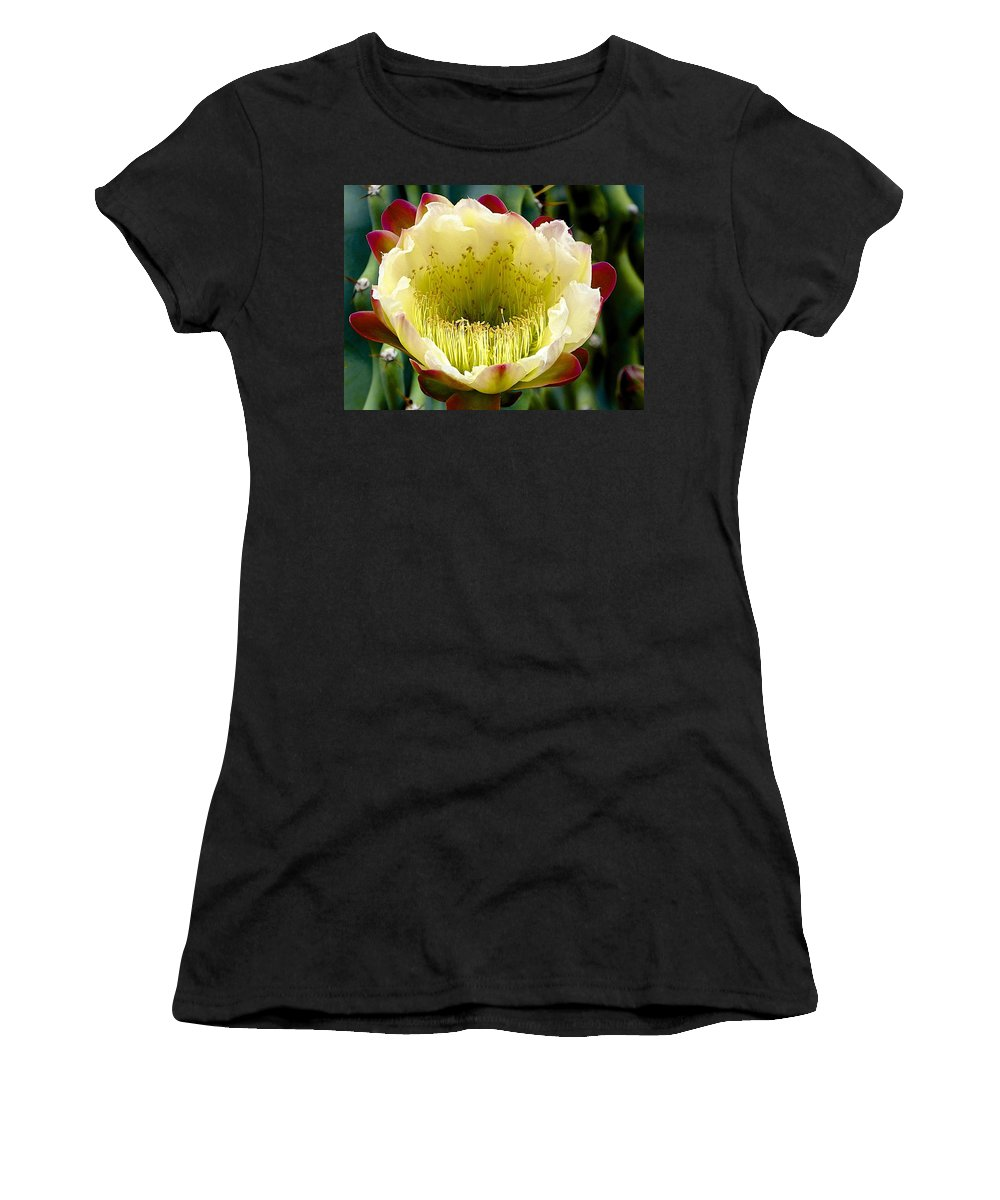 Cacti Women's T-Shirt featuring the photograph Cereus Cactus Flower by Barbara Zahno