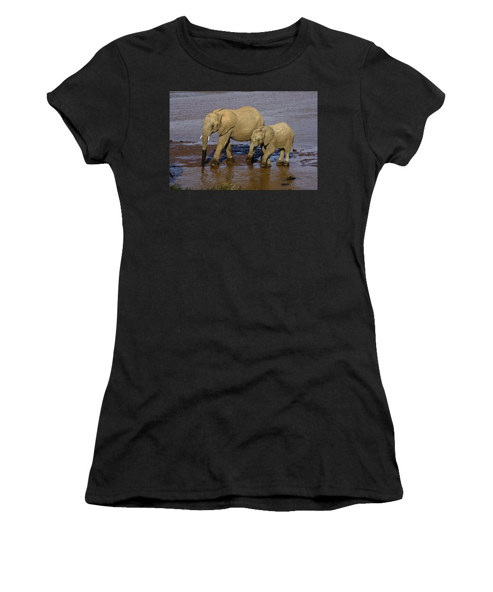Africa Women's T-Shirt (Athletic Fit) featuring the photograph Elephant Crossing by Michele Burgess