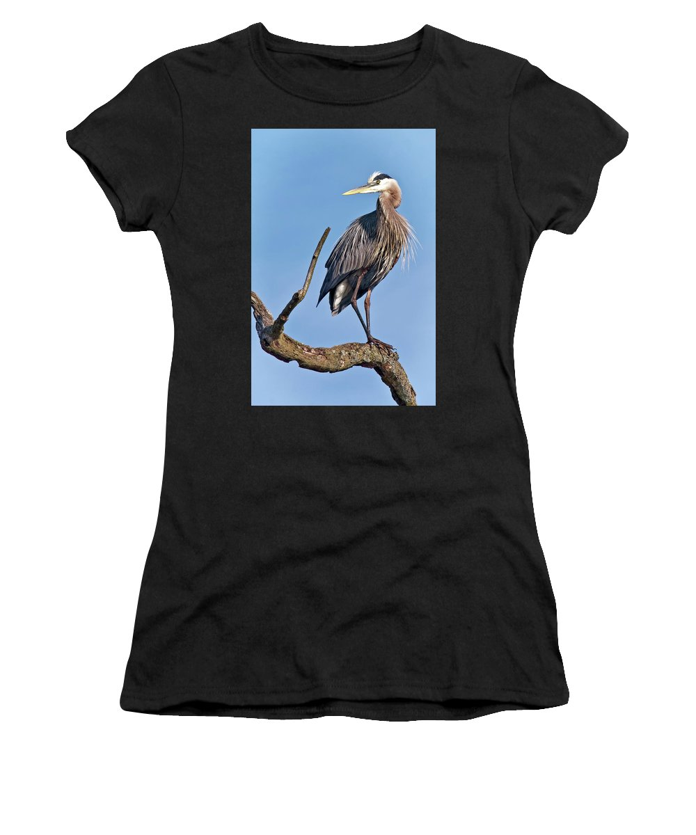 Nature Women's T-Shirt (Athletic Fit) featuring the photograph Great Blue Heron by Marcia Colelli