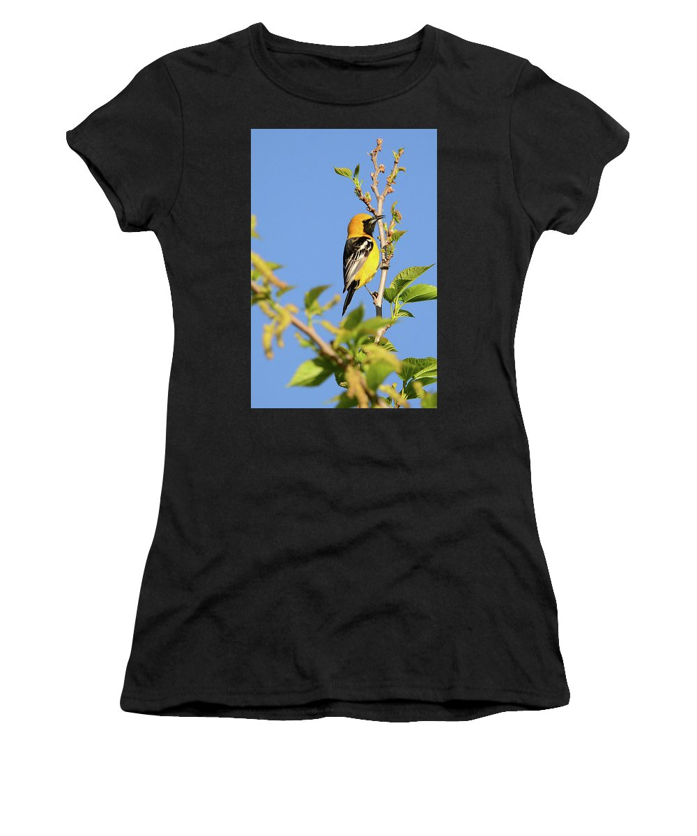 Wildlife Women's T-Shirt (Athletic Fit) featuring the photograph Hooded Oriole by Thomas Morris