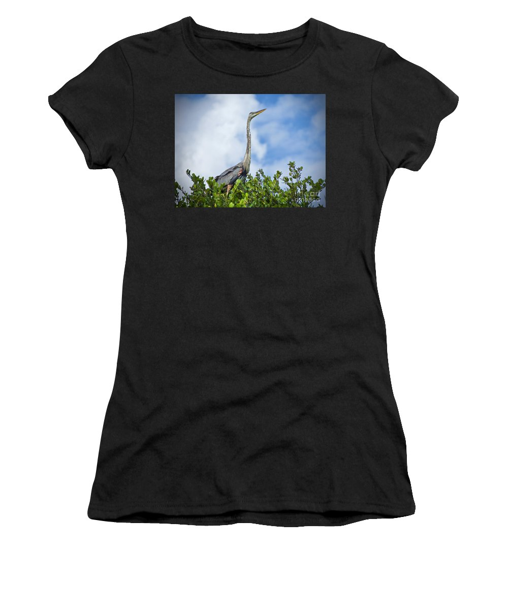 Great Blue Herons Women's T-Shirt featuring the photograph Looking Up by Judy Kay