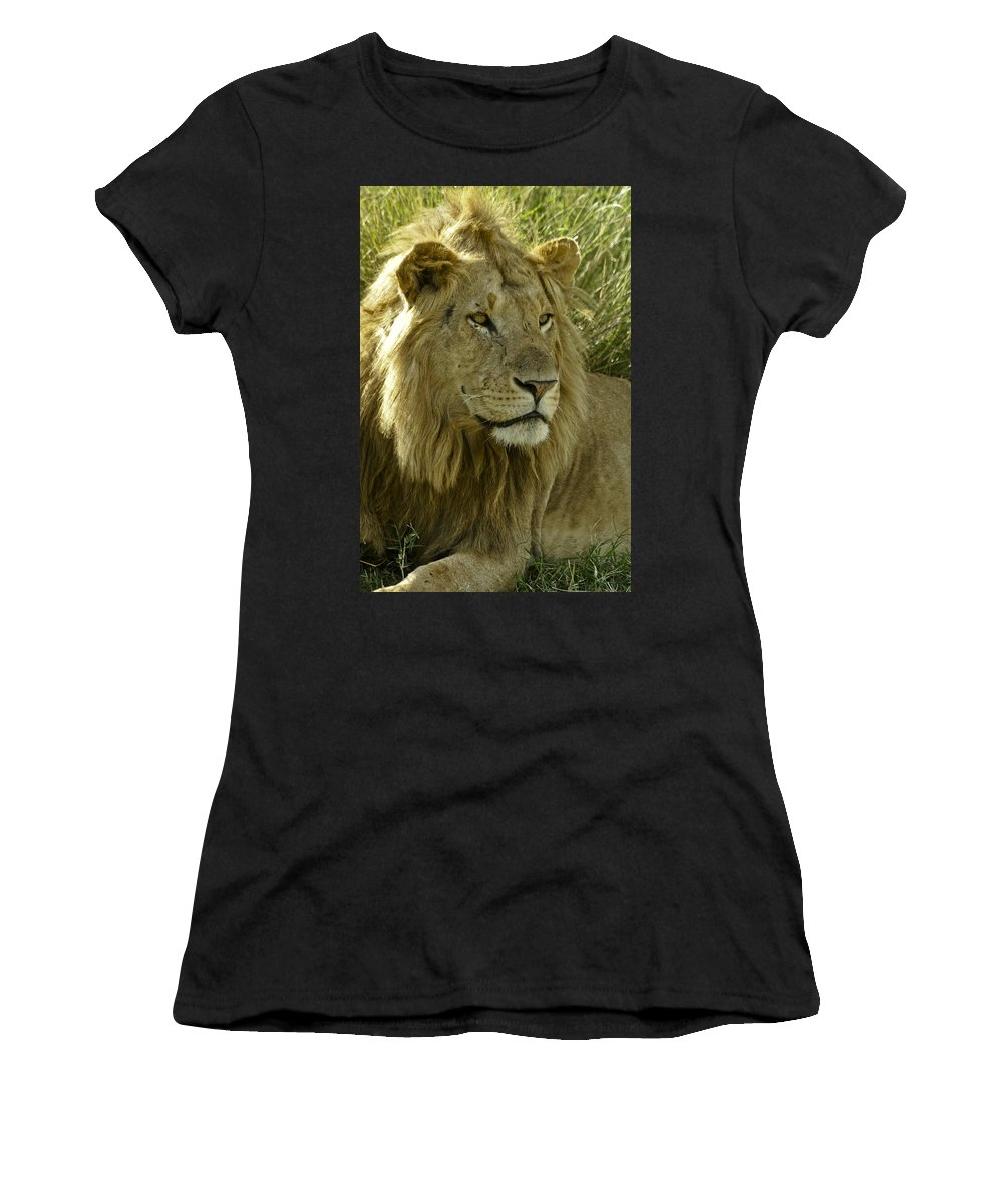 Lion Women's T-Shirt (Athletic Fit) featuring the photograph Nice Kitty by Michele Burgess