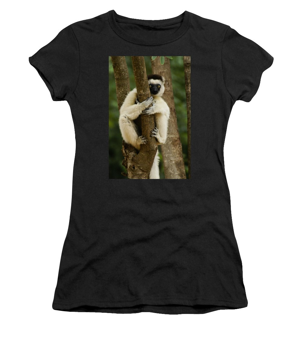 Madagascar Women's T-Shirt (Athletic Fit) featuring the photograph Verreaux's Sifaka by Michele Burgess