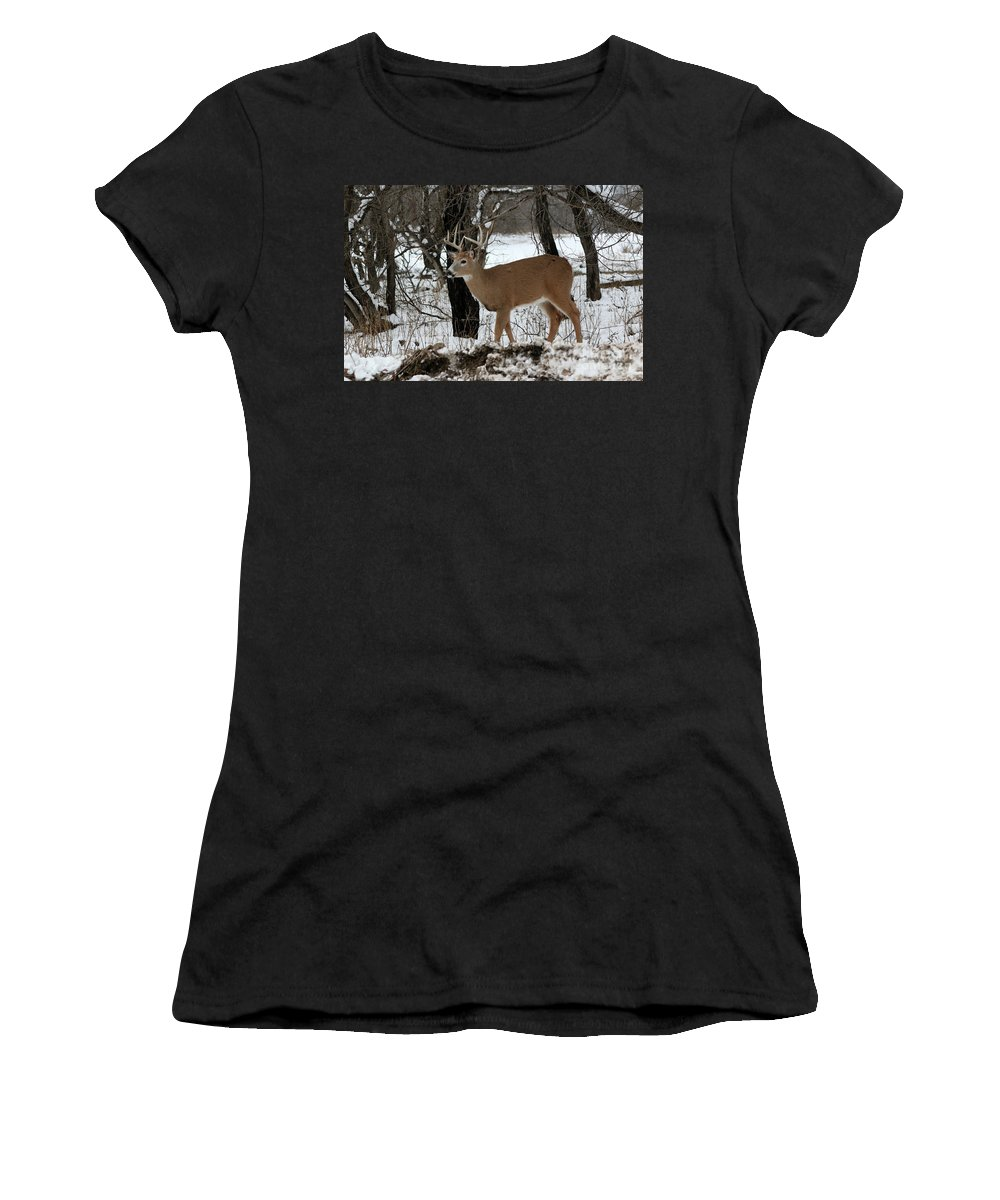 Deer Women's T-Shirt (Athletic Fit) featuring the photograph Whitetail Buck by Lori Tordsen