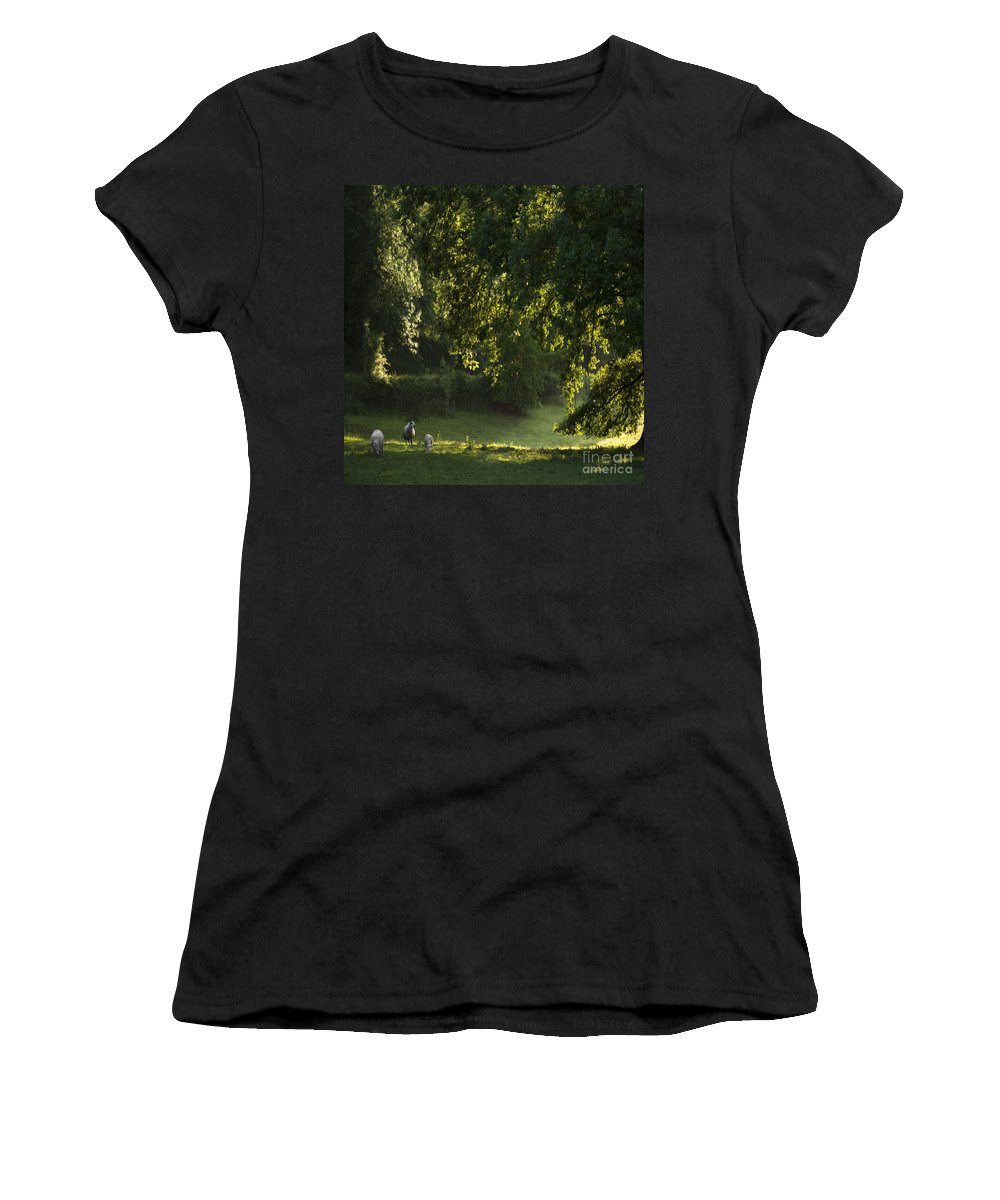 Sheep Women's T-Shirt (Athletic Fit) featuring the photograph Lazy Afternoon by Angel Ciesniarska