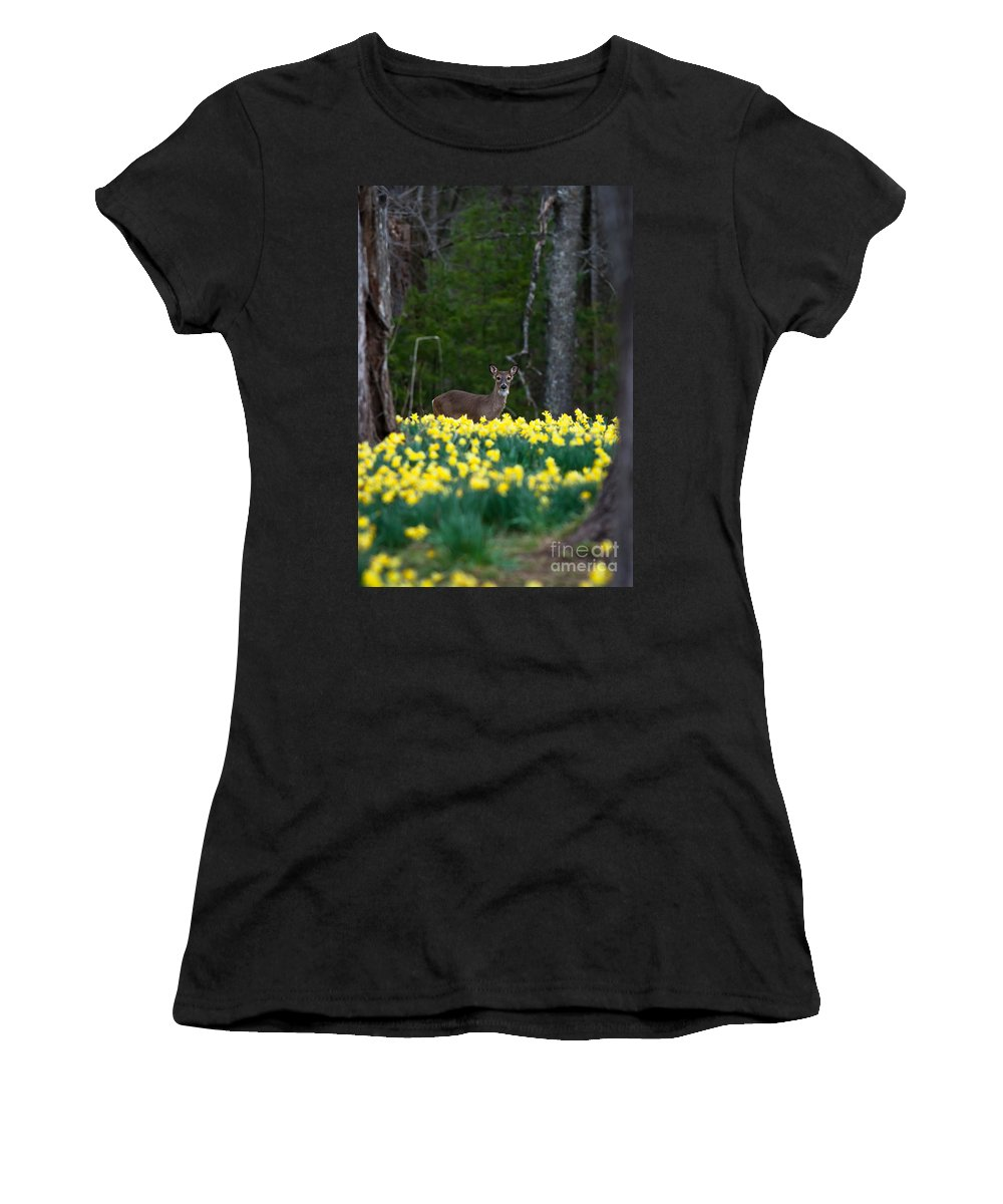 Deer Women's T-Shirt (Athletic Fit) featuring the photograph A Deer And Daffodils 4 by Douglas Stucky