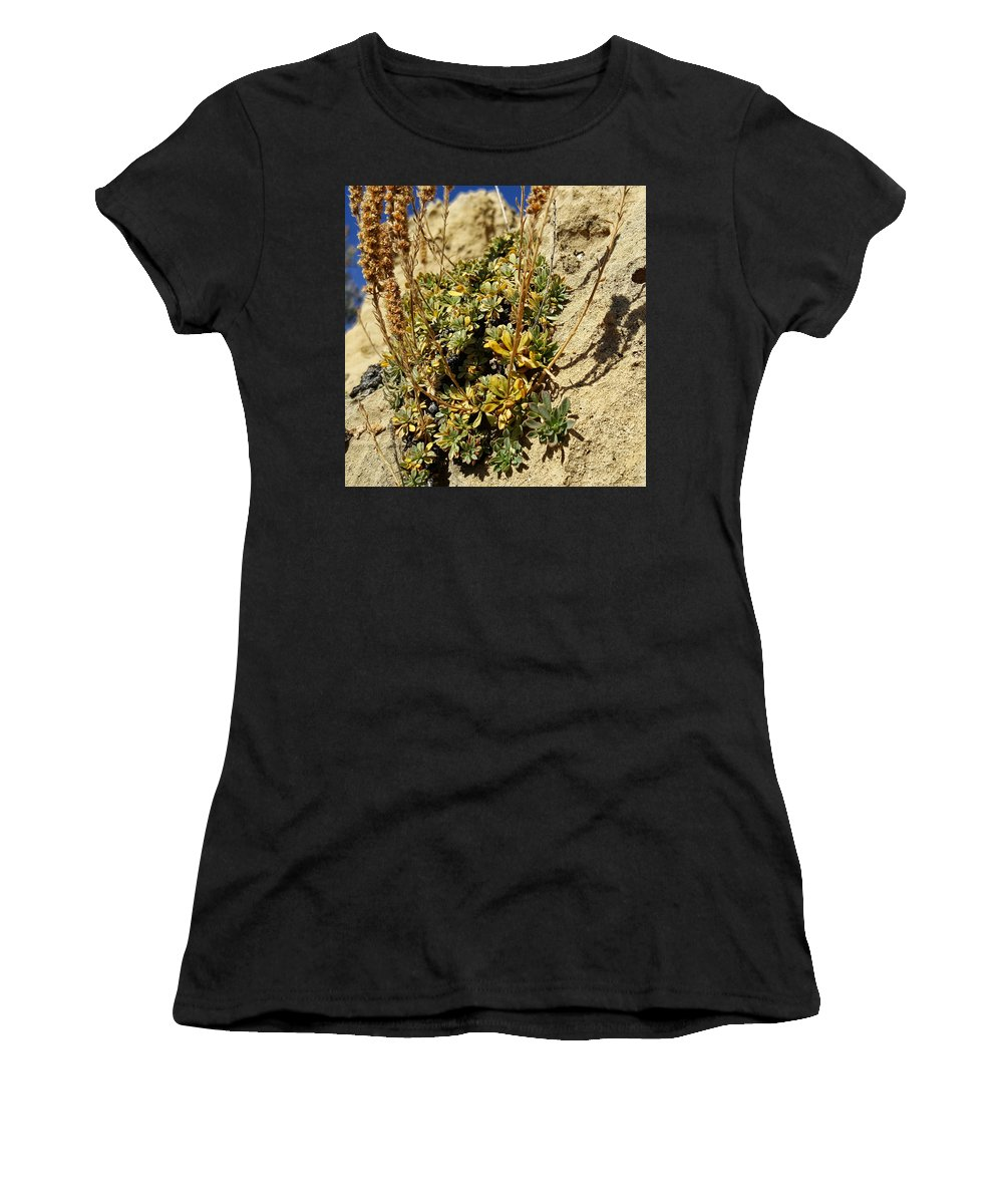 Native Plant Women's T-Shirt (Athletic Fit) featuring the photograph Abundance In The Midst Of Austerity by Jim Thomas