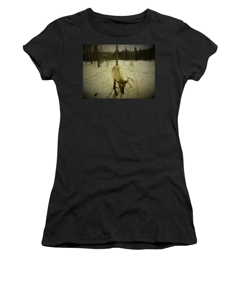 Alaska Reindeer Woods Snow Nature Wildlife Women's T-Shirt featuring the photograph Alaskan Morning by The Sangsters