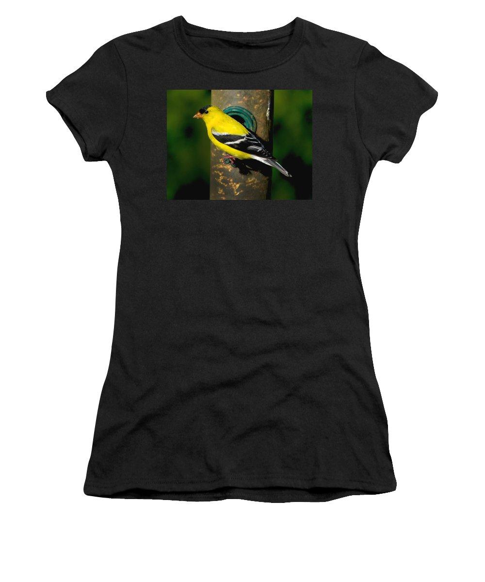 Bird Women's T-Shirt featuring the photograph American Goldfinch by Craig Bohnert