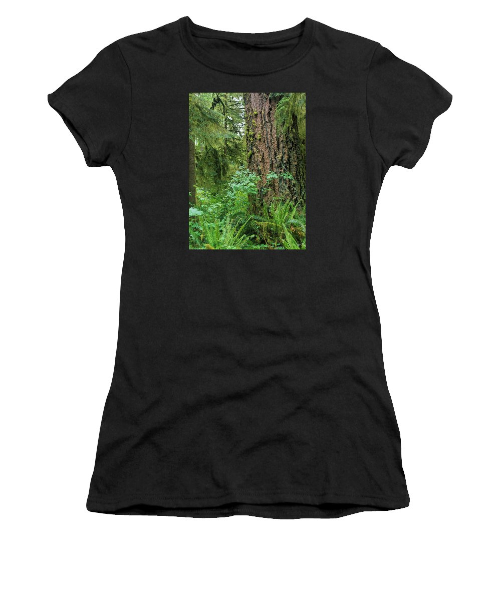 Douglas Fir Women's T-Shirt (Athletic Fit) featuring the photograph Ancient Trees by Robert Potts