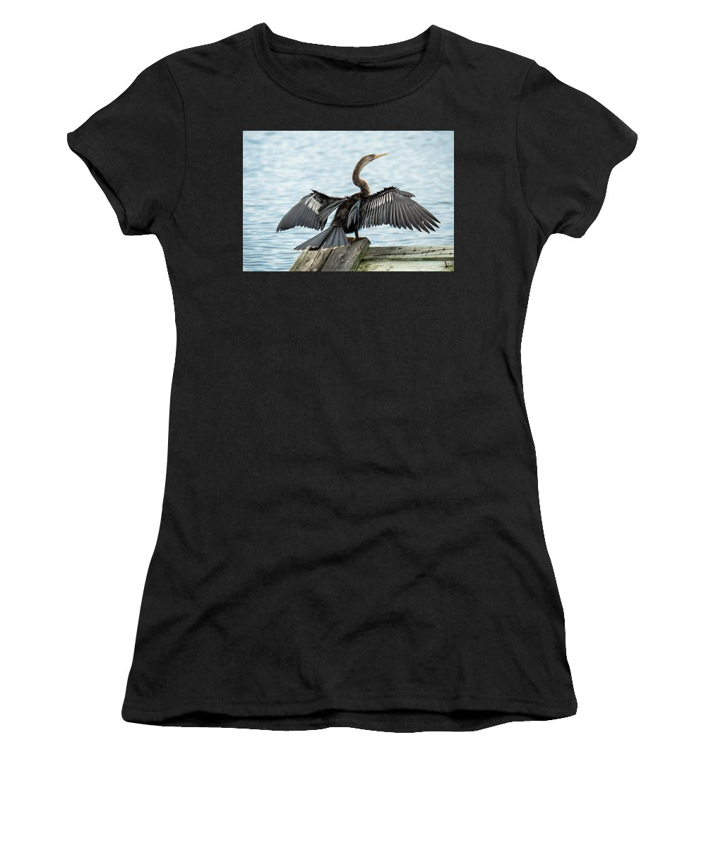 Anhinga Women's T-Shirt (Athletic Fit) featuring the photograph Anhinga Drying Its Wings by David Ramage