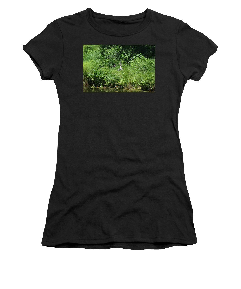 Marsh Women's T-Shirt featuring the photograph Annoyed - Heron and Red Winged Blackbird 5 of 10 by Colleen Cornelius