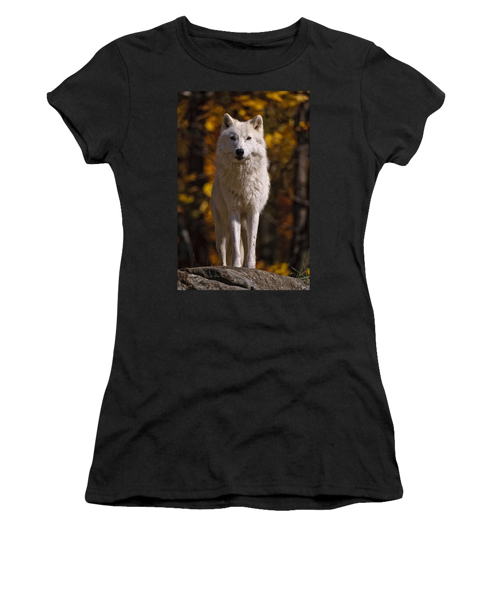 Michael Cummings Women's T-Shirt featuring the photograph Arctic Wolf On Rocks by Michael Cummings