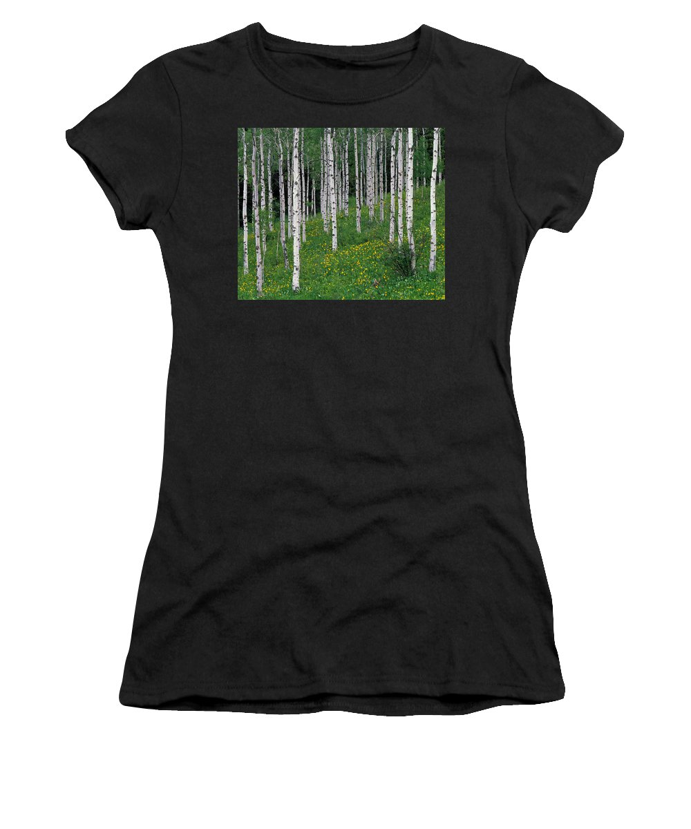 Aspen Women's T-Shirt (Athletic Fit) featuring the photograph Aspens In Spring by Leland D Howard