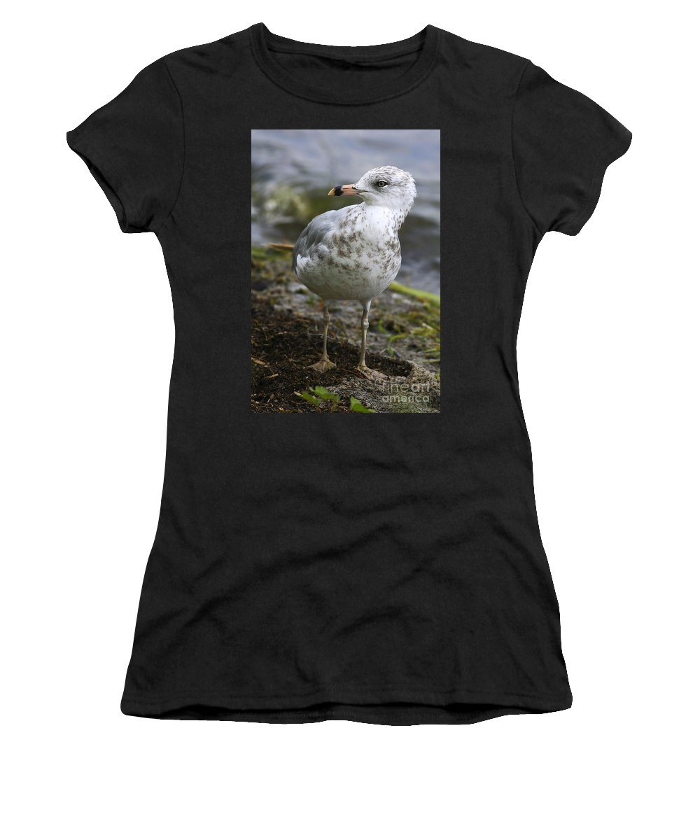 Bird Women's T-Shirt (Athletic Fit) featuring the photograph At The Beach by Deborah Benoit
