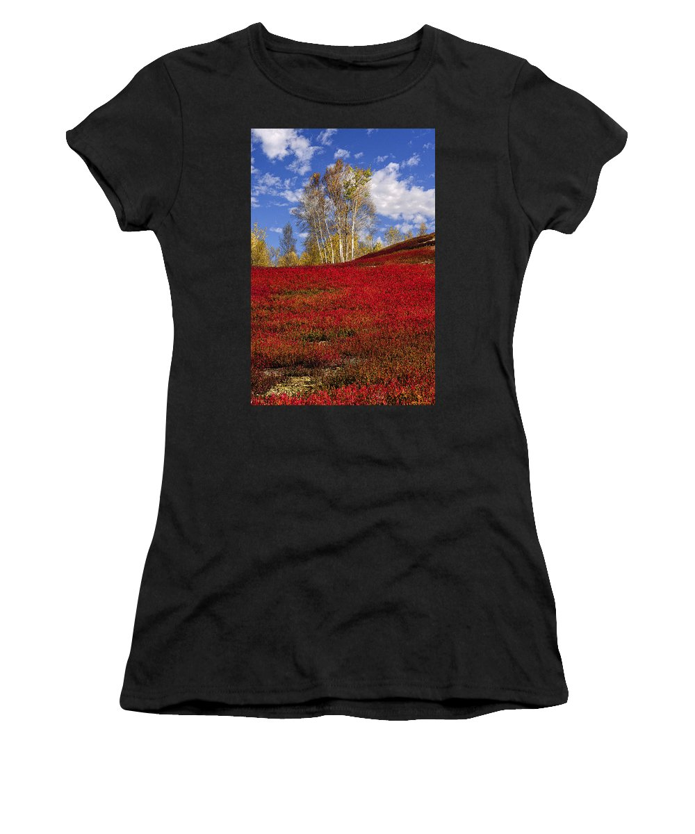 Birch Trees Women's T-Shirt (Athletic Fit) featuring the photograph Autumn Birches And Barrens by Marty Saccone
