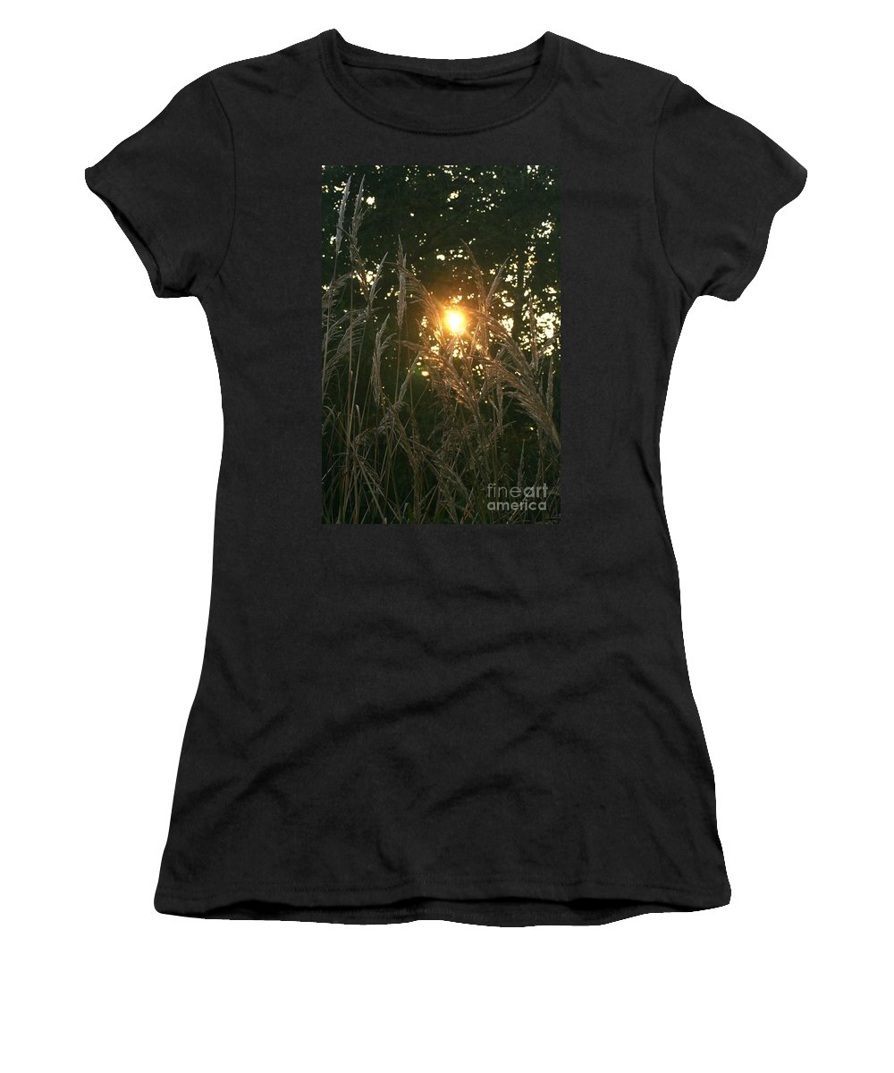 Light Women's T-Shirt (Athletic Fit) featuring the photograph Autumn Grasses In The Morning by Nadine Rippelmeyer