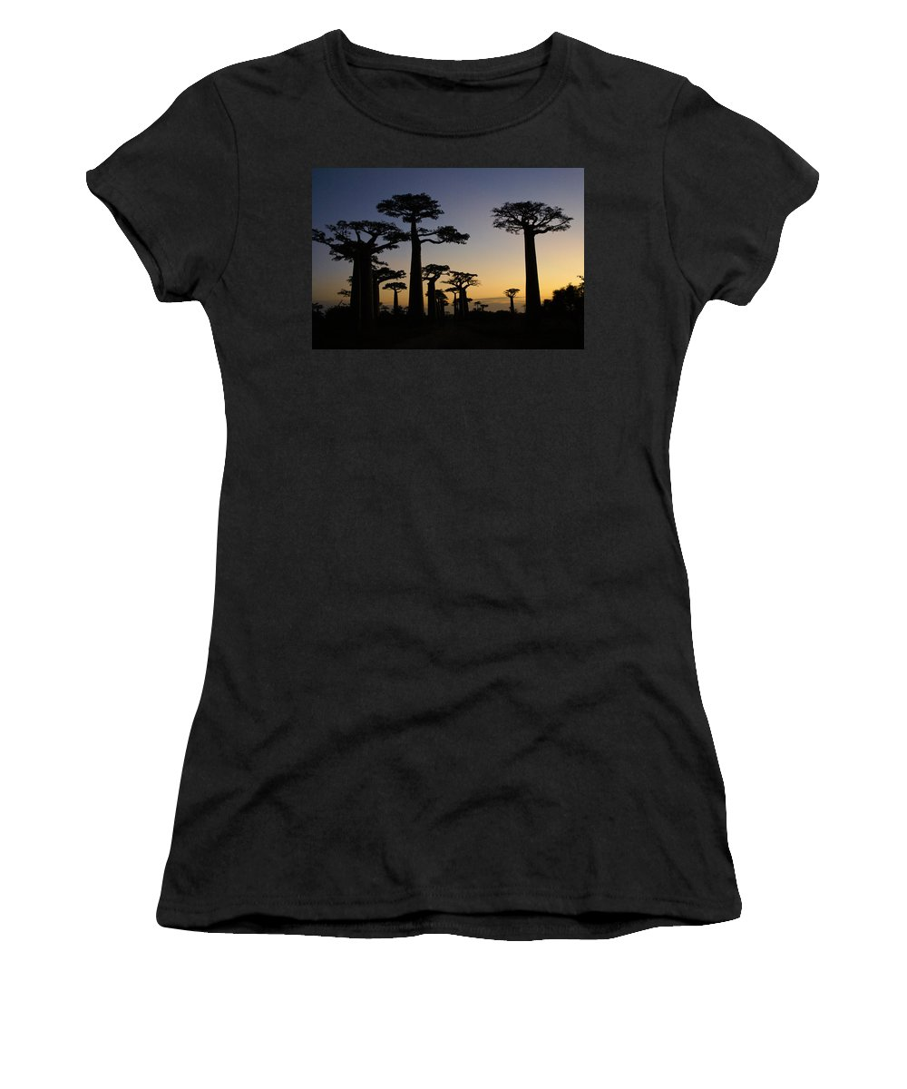 Madagascar Women's T-Shirt (Athletic Fit) featuring the photograph Baobab Forest At Sunset by Michele Burgess
