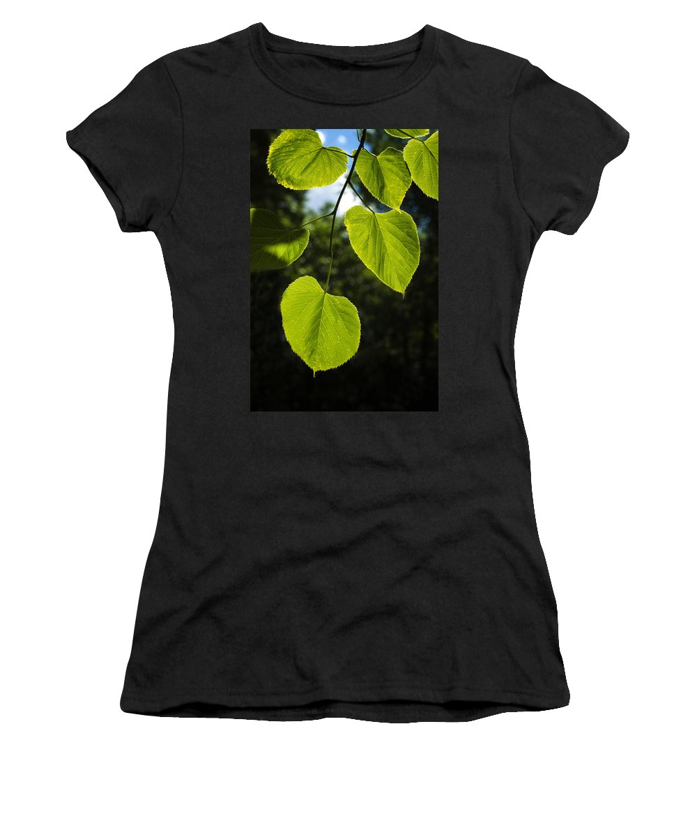 Unique Women's T-Shirt featuring the photograph Basswood Leaves Against Dark Forest Background by Donald Erickson