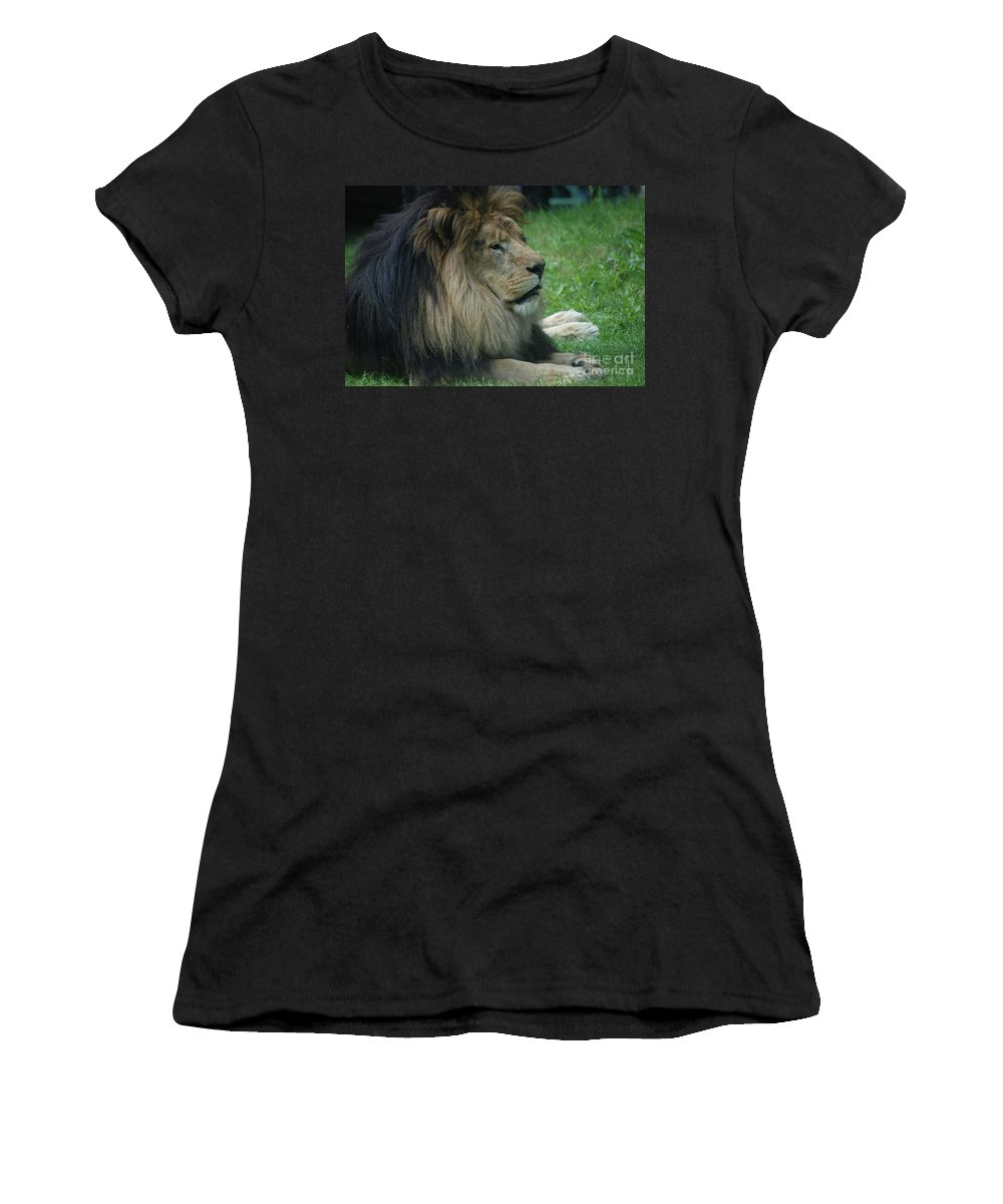 Lion Women's T-Shirt (Athletic Fit) featuring the photograph Beautiful Resting Lion In Tall Green Grass by DejaVu Designs