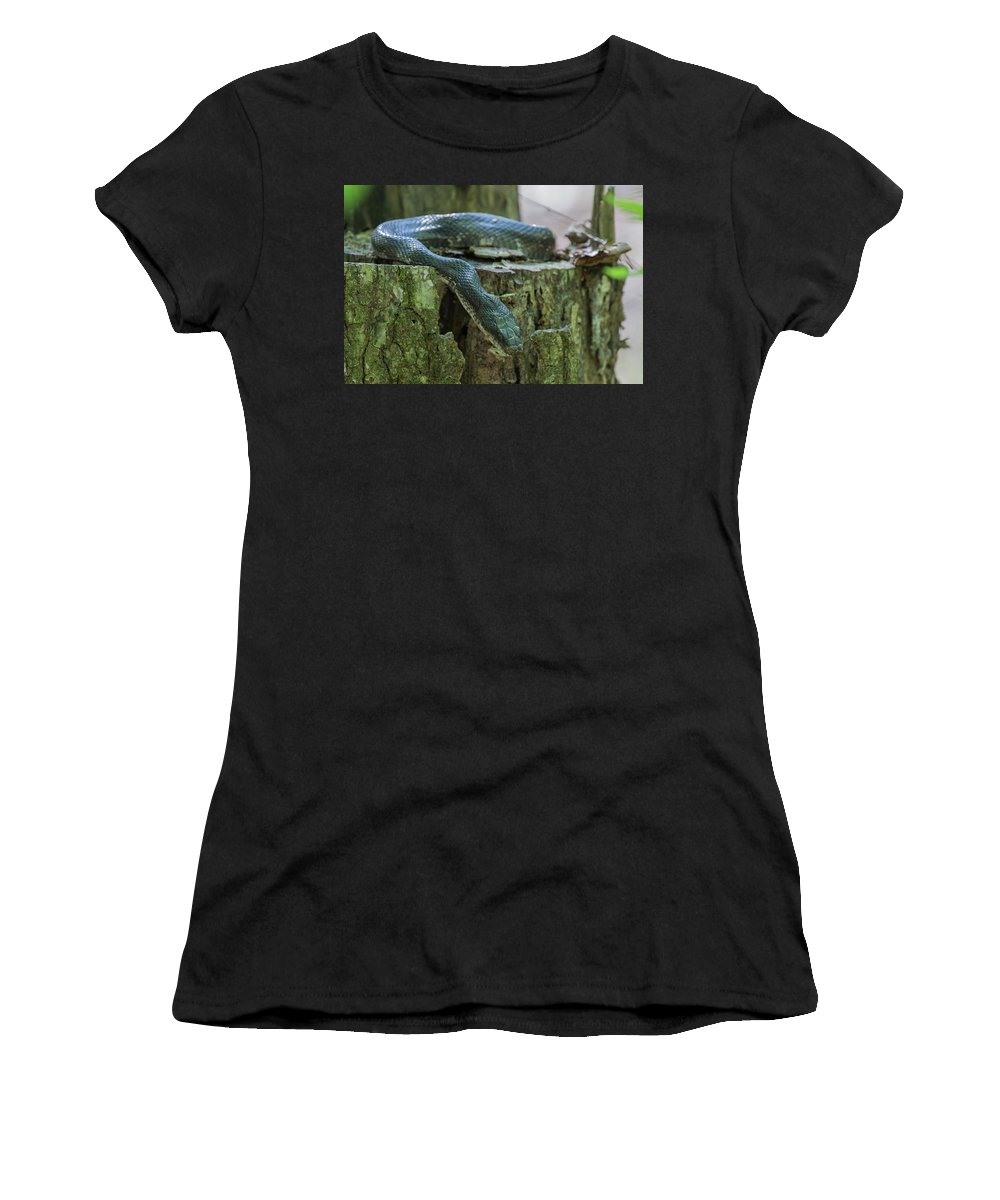 Ronnie Maum Women's T-Shirt (Athletic Fit) featuring the photograph Black Rat Snake by Ronnie Maum